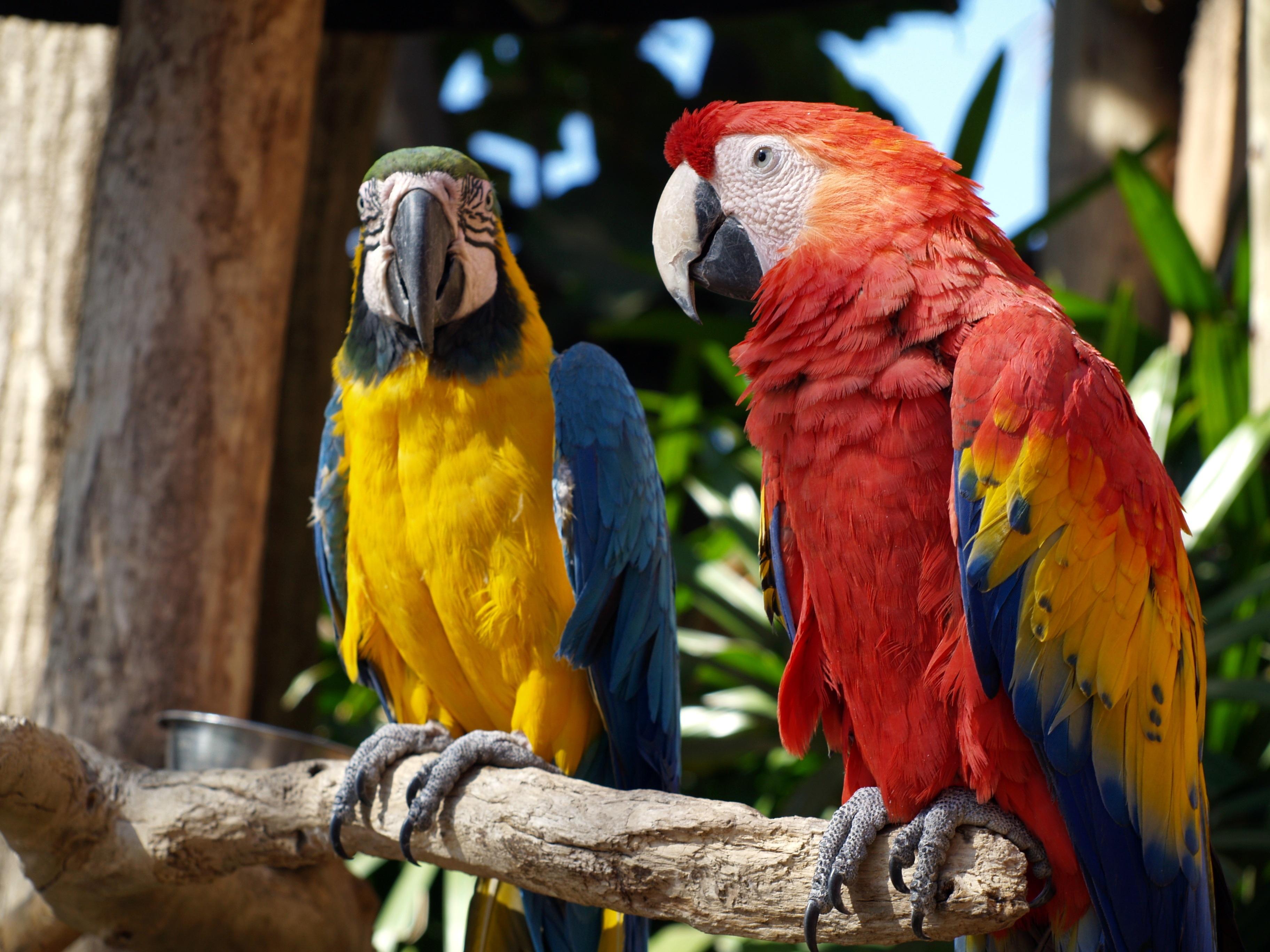 Online-Verkauf wähle echt feinste Auswahl Bildet : natur, fugl, dyreliv, nebb, fargerik, fauna ...