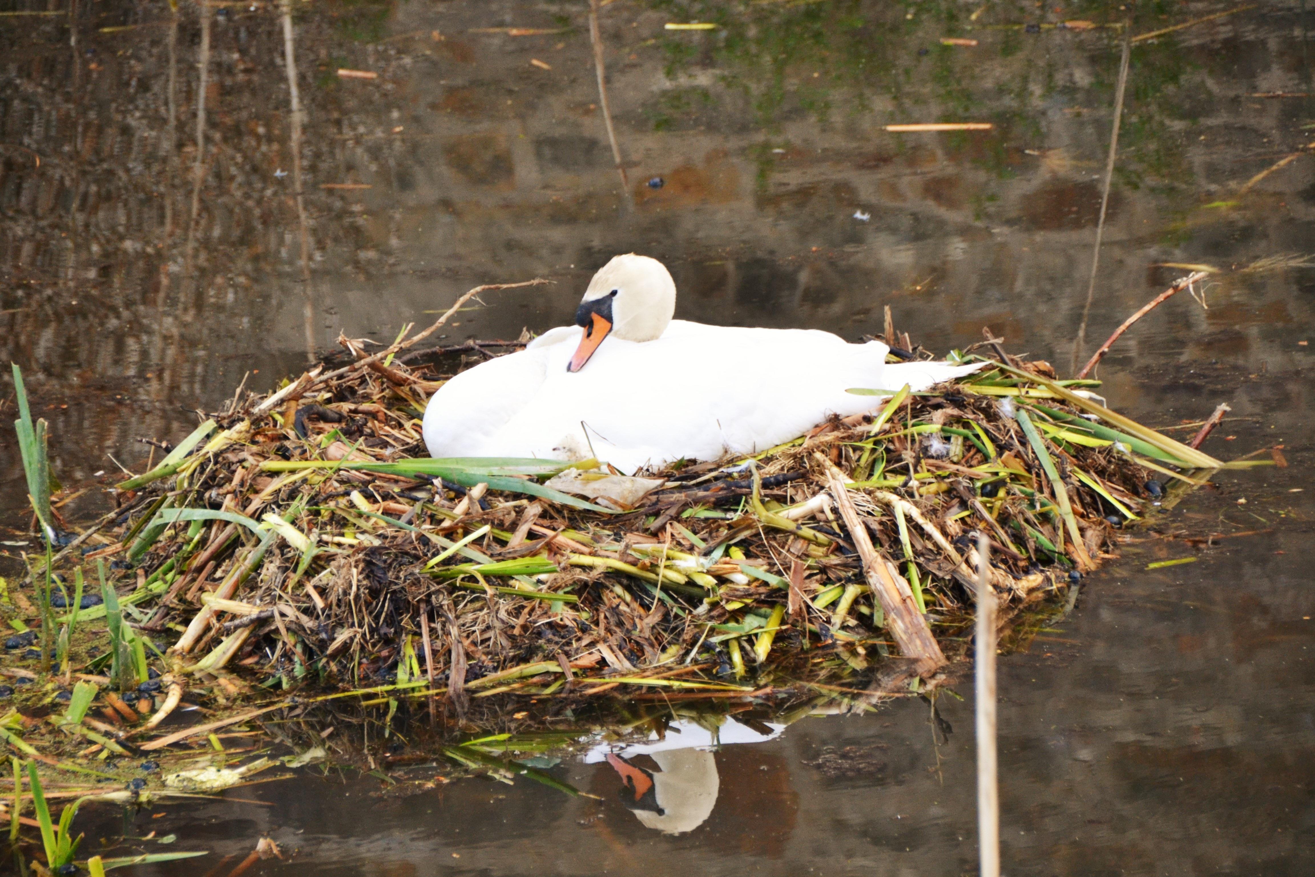 Fotos gratis naturaleza p jaro fauna silvestre pico for Imagenes de estanques para patos