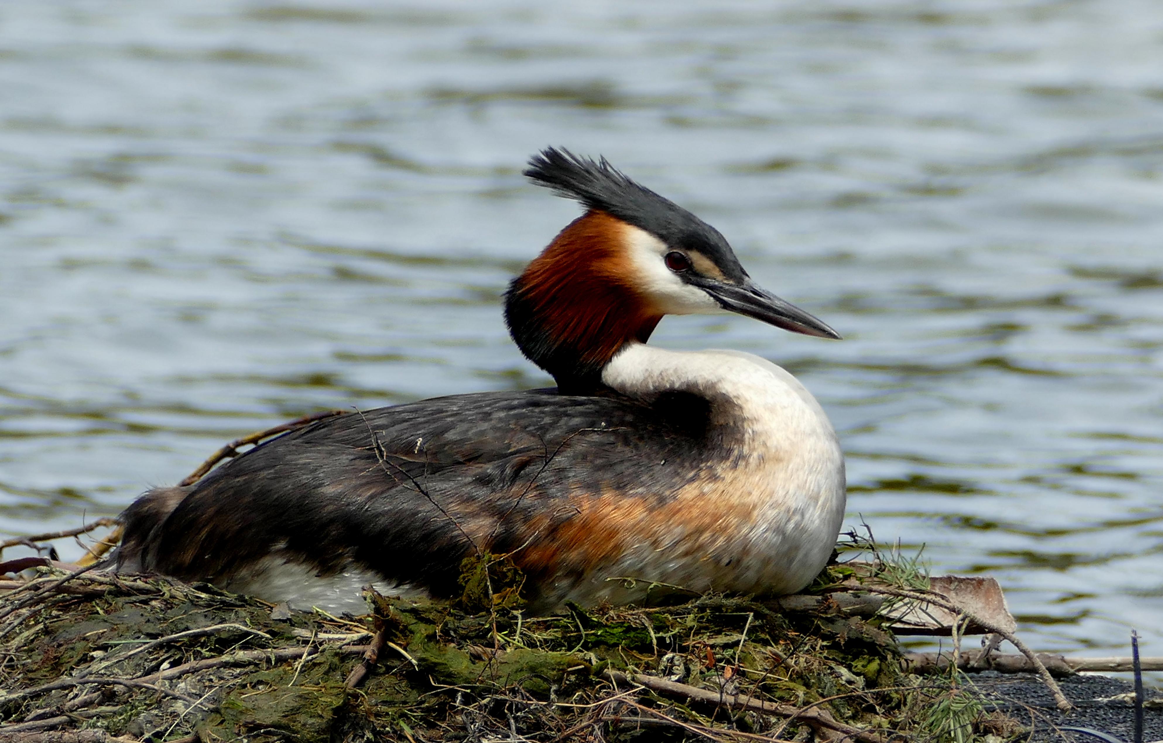 Free Images : nature, wildlife, beak, fauna, vertebrate ...