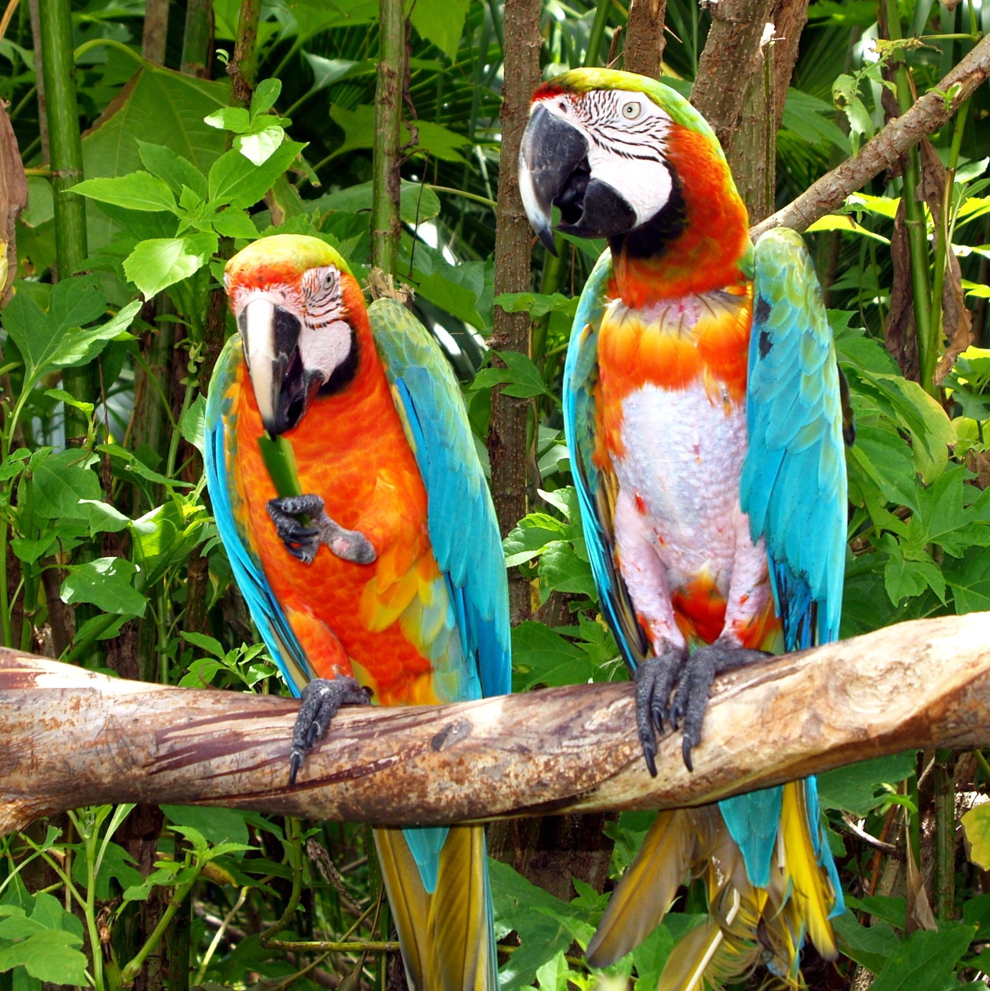 закуски картинки попугаев джунглях особенностях посадки ухода