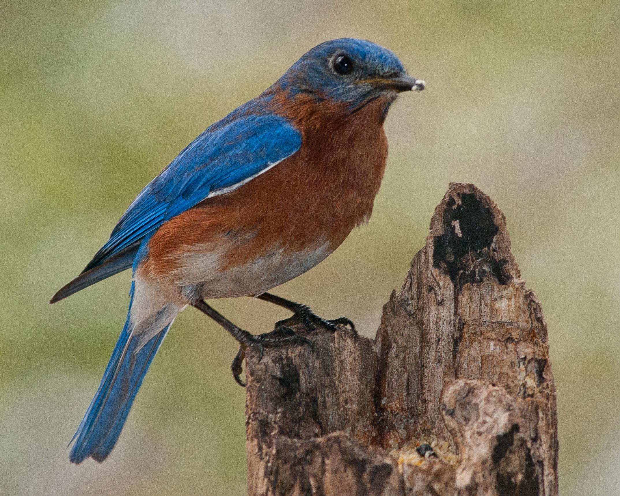 использование садовые птицы фото и названия вашему вниманию подборку