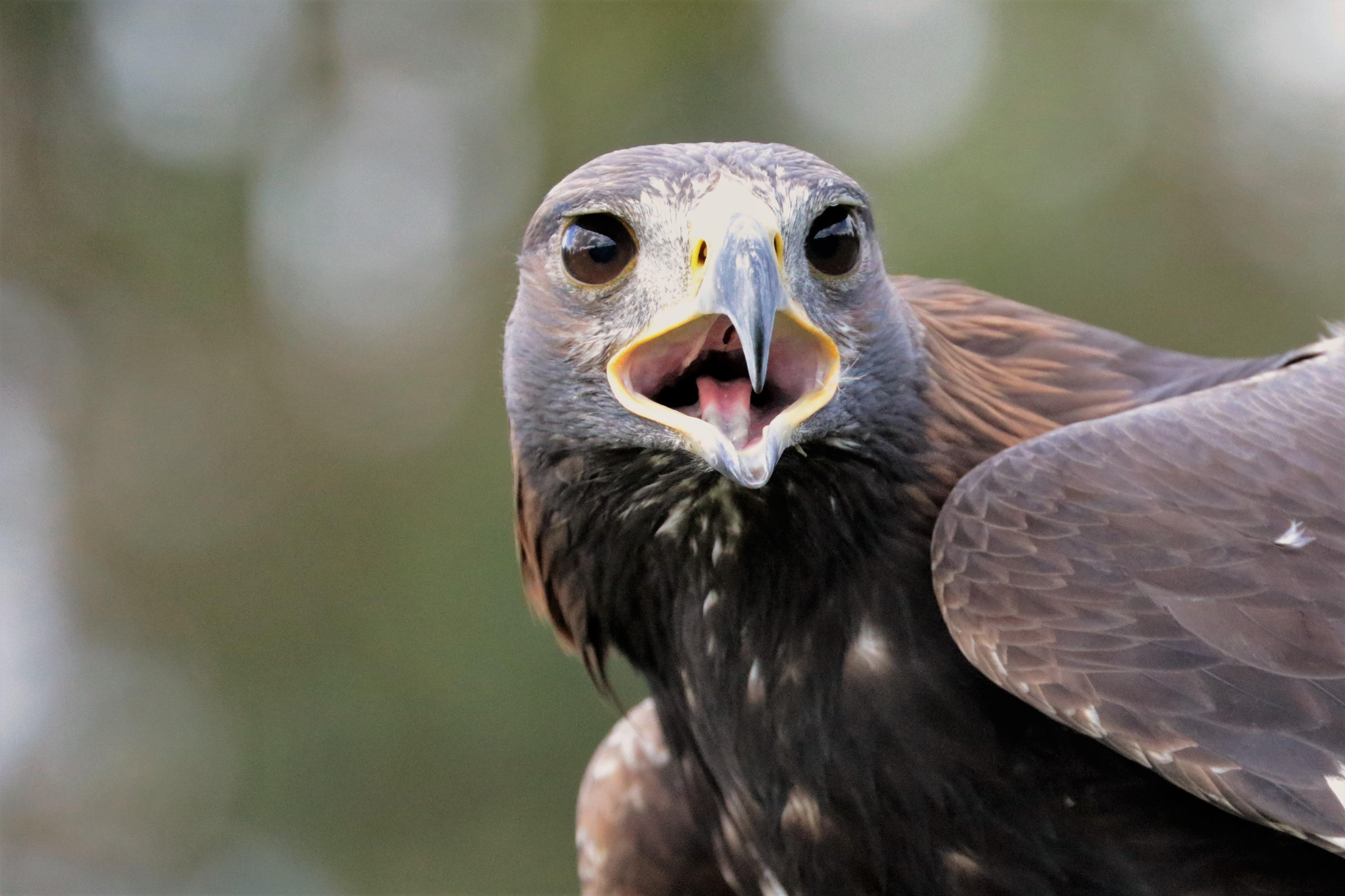 banco de imagens natureza pássaro asa animal perfil animais