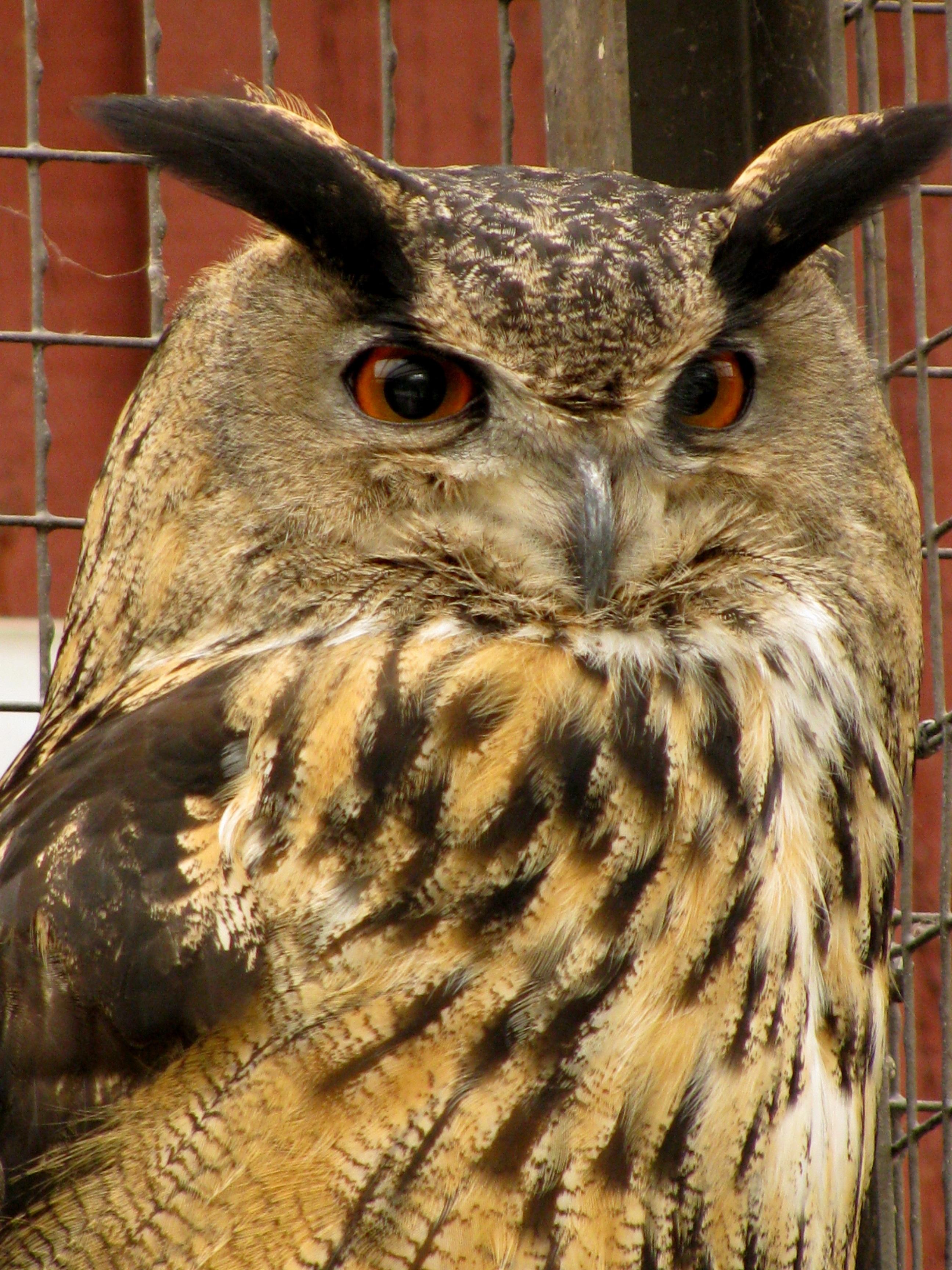 Free Images : nature, wing, animal, wildlife, beak, fauna, bird of ...