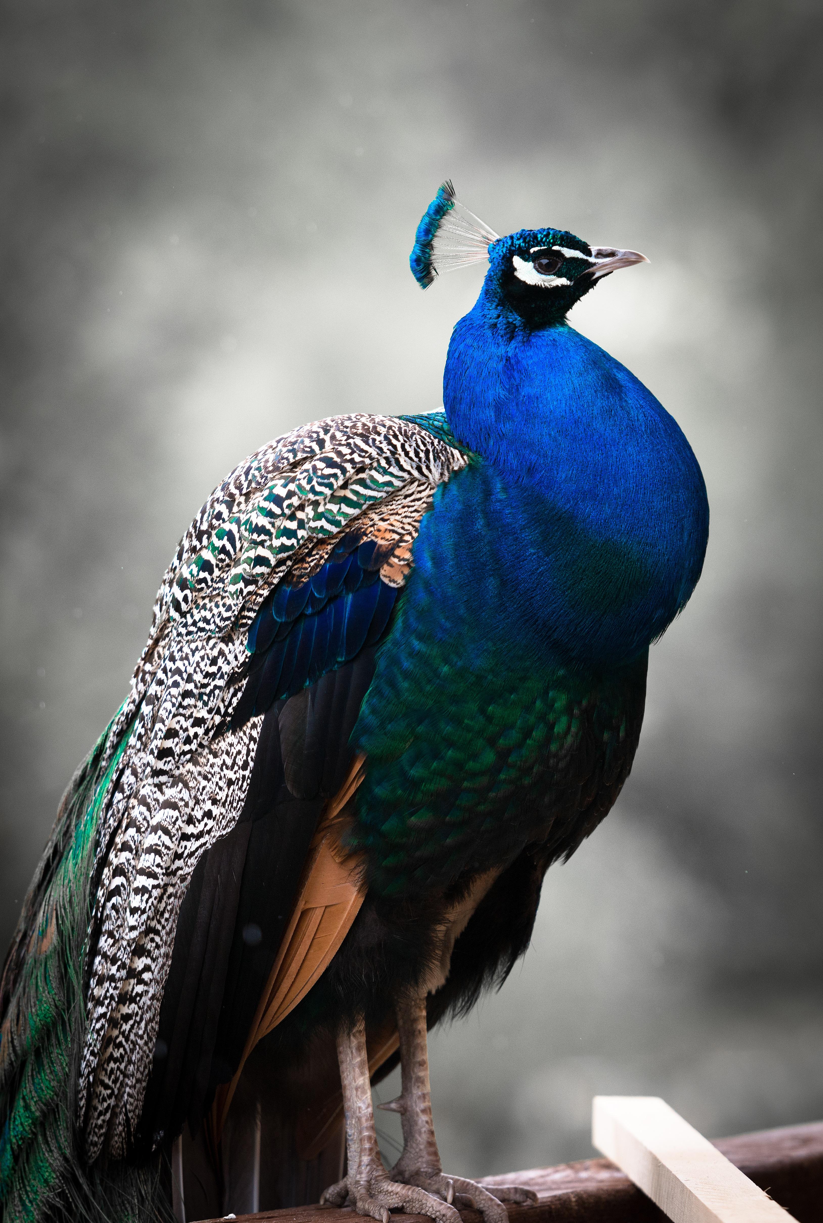 Free Images : nature, bird, wing, animal, wildlife, zoo ...