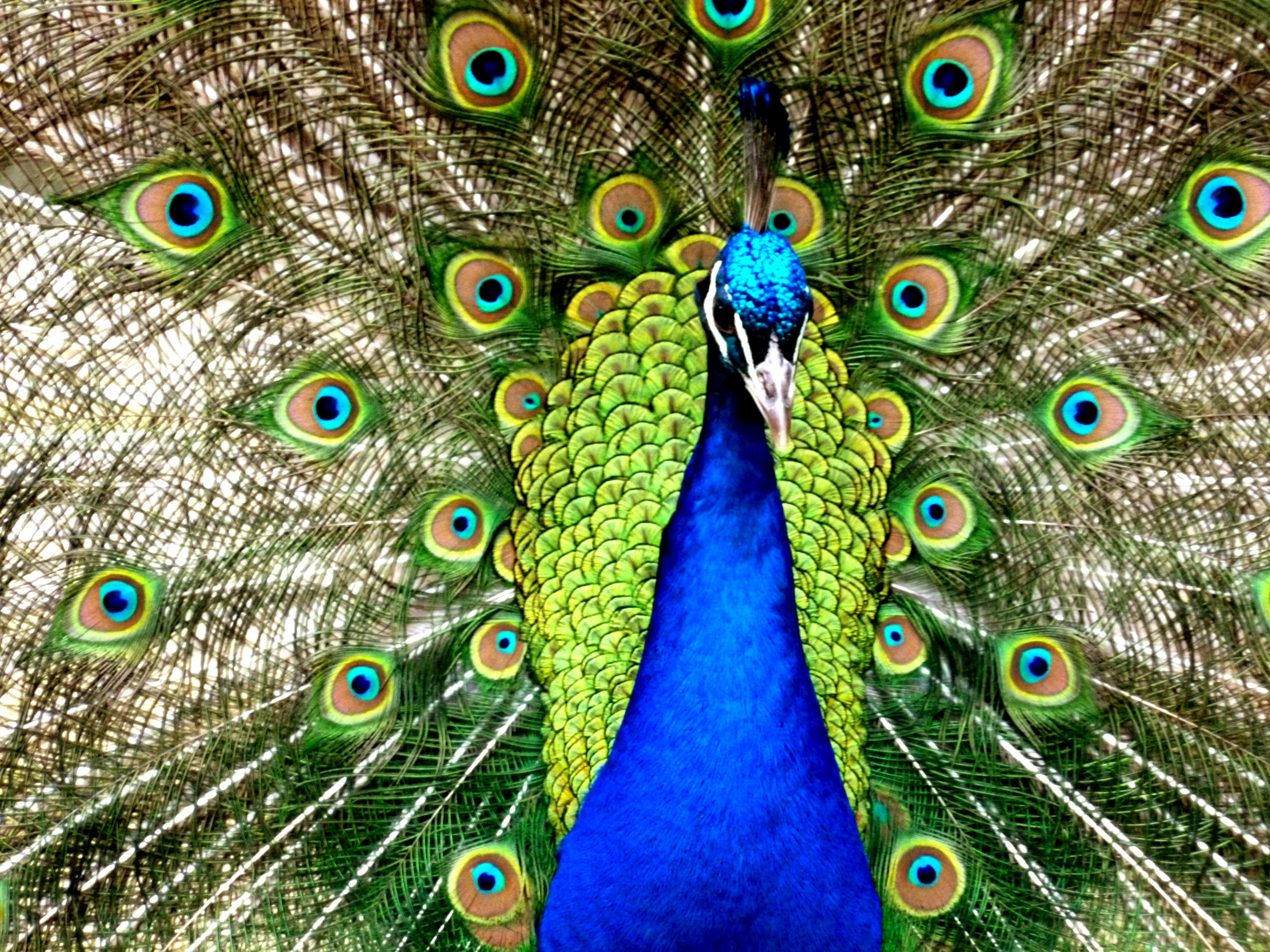 860+ Gambar Binatang Warna Hijau Gratis Terbaik