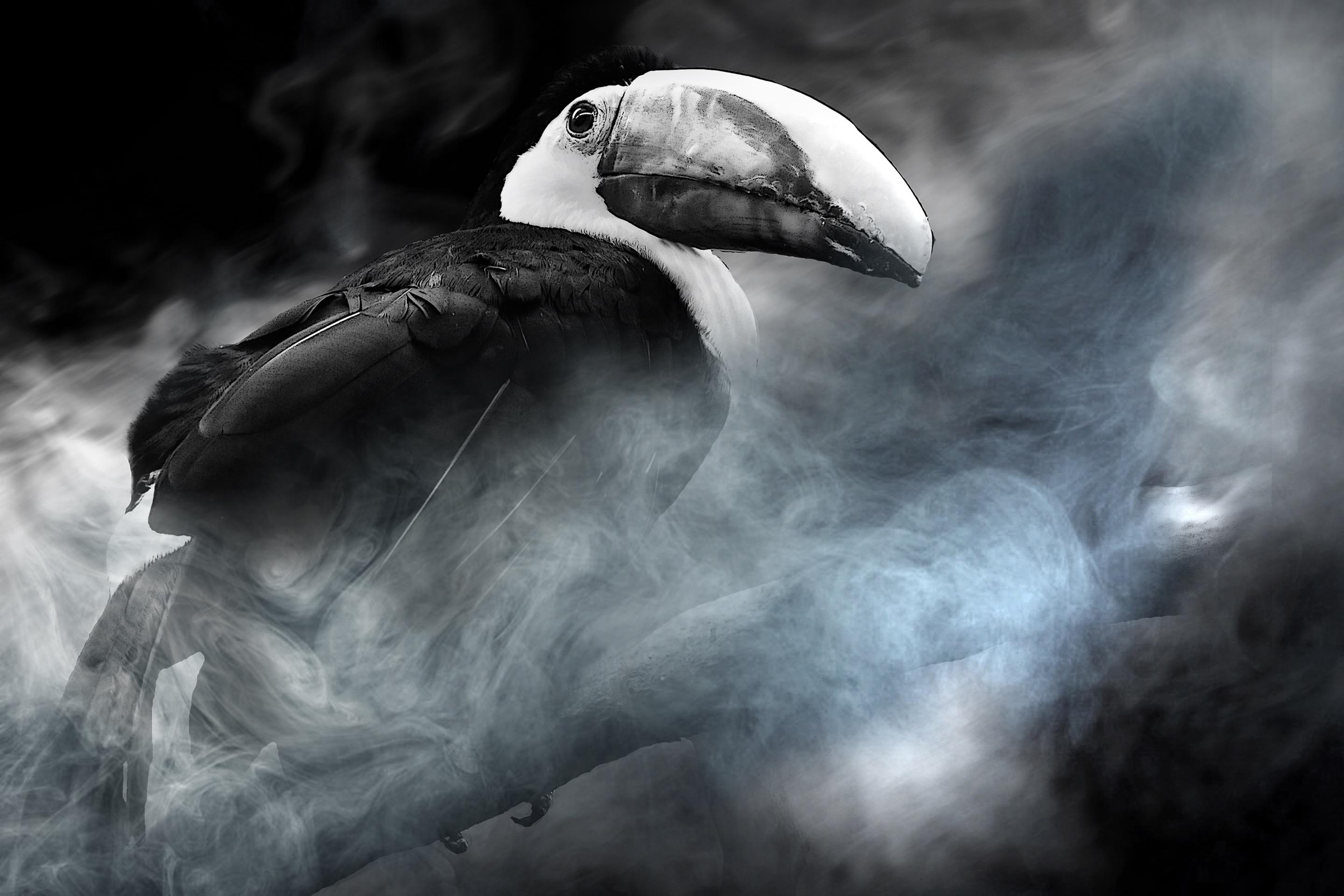μεγάλο μαύρο πουλί δωρεάν φωτογραφίες