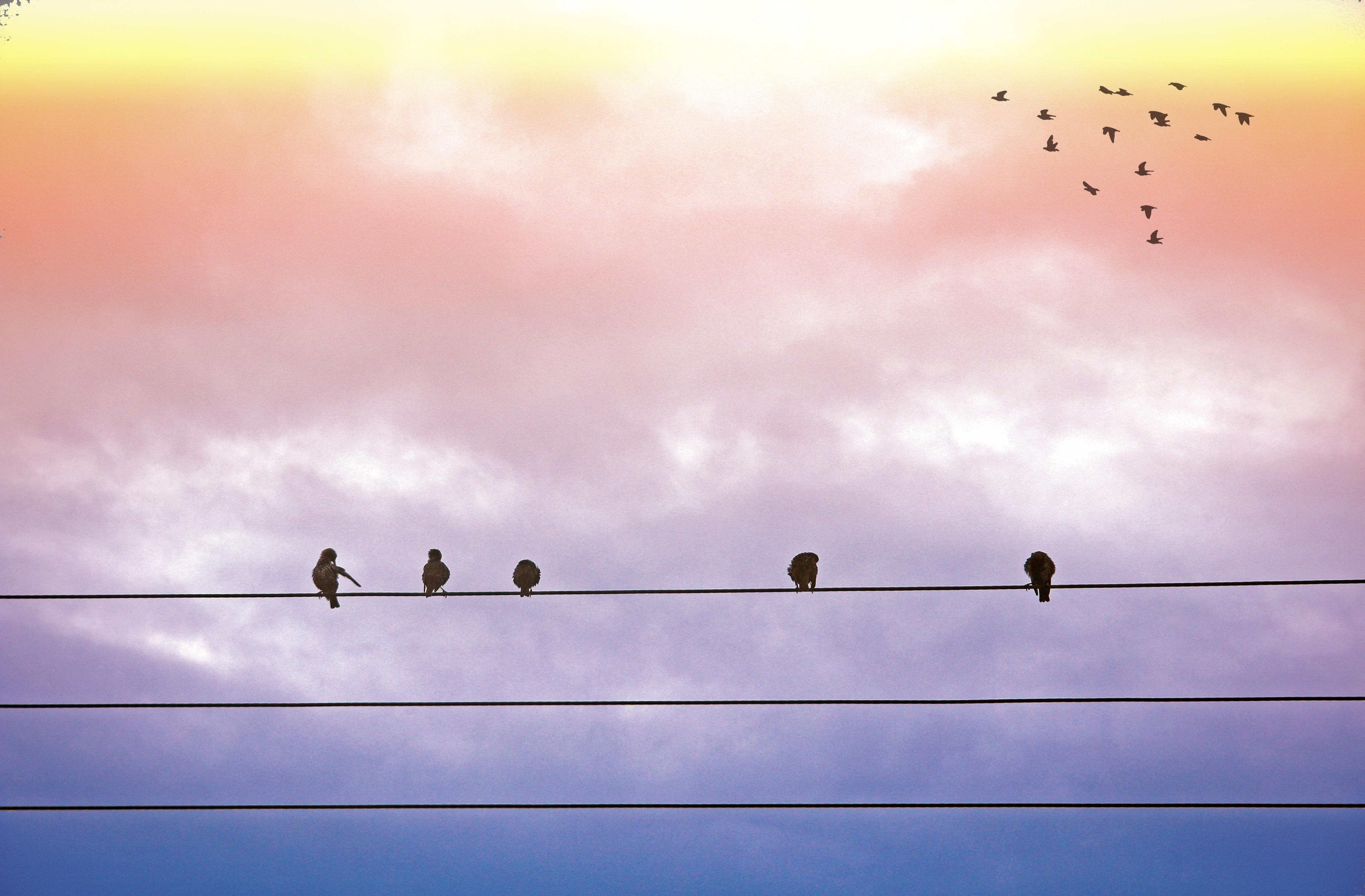 Free Images : nature, bird, wing, cloud, sky, sunrise, sunset ...