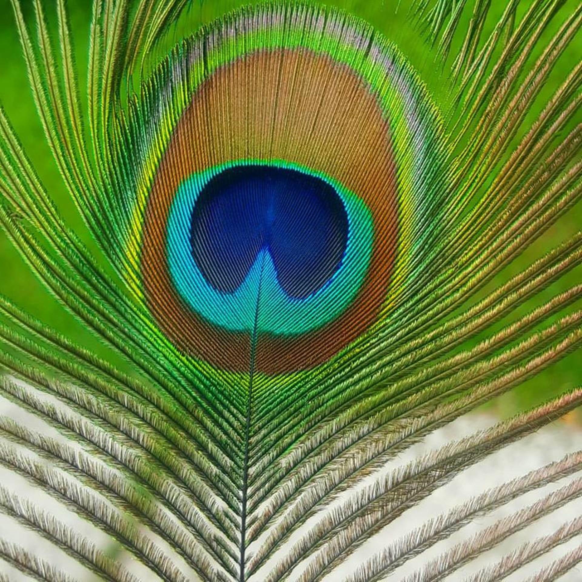images gratuites la nature oiseau aile feuille stylo animal ligne vert couleur bleu. Black Bedroom Furniture Sets. Home Design Ideas