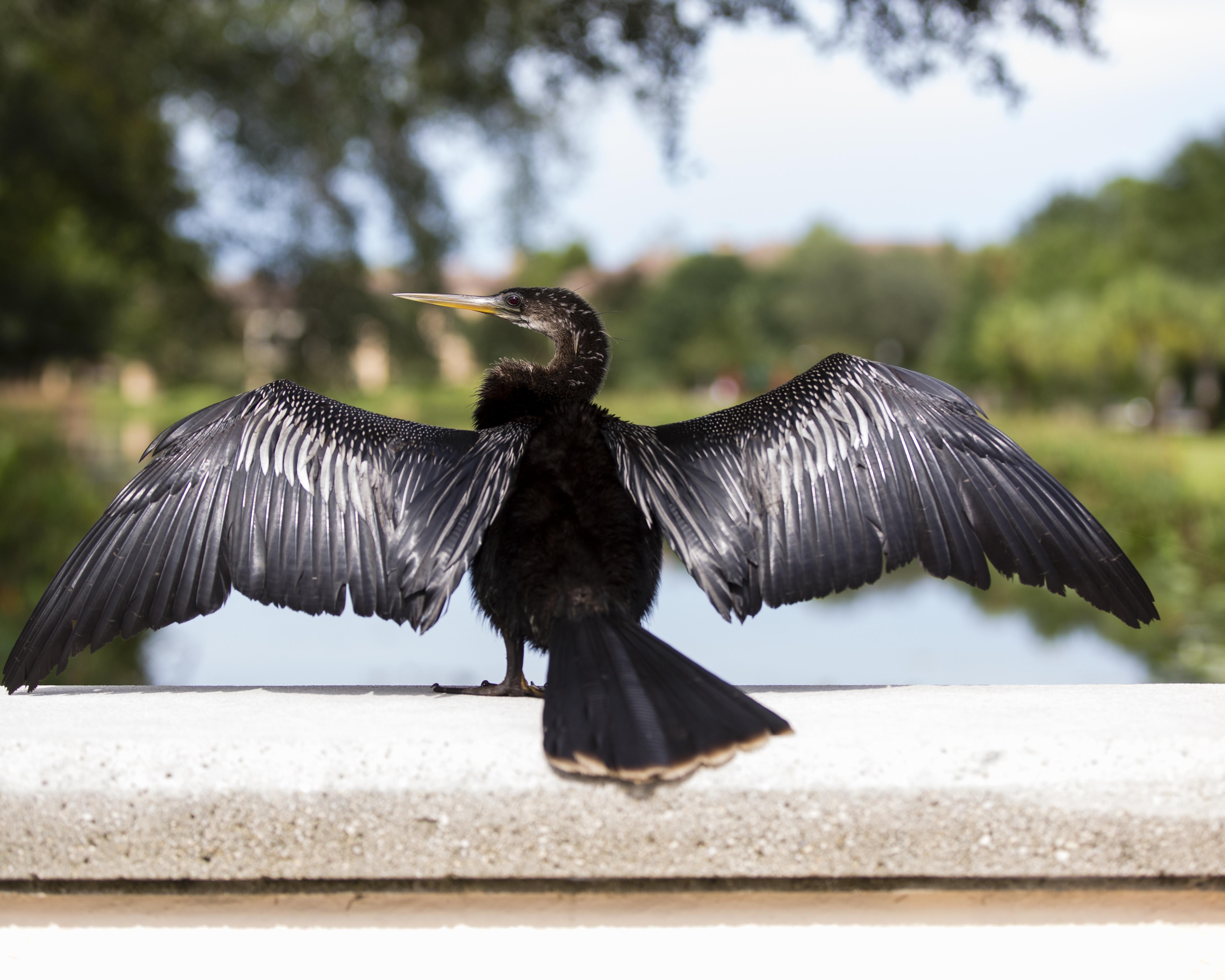 крыло птицы фотографии фильтрами можете сузить