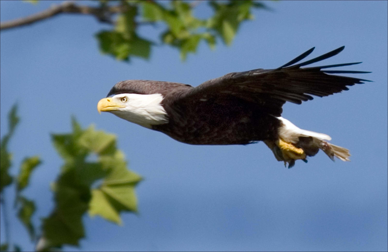 Free Images Nature Wing Sky Flying Wildlife Wild Beak