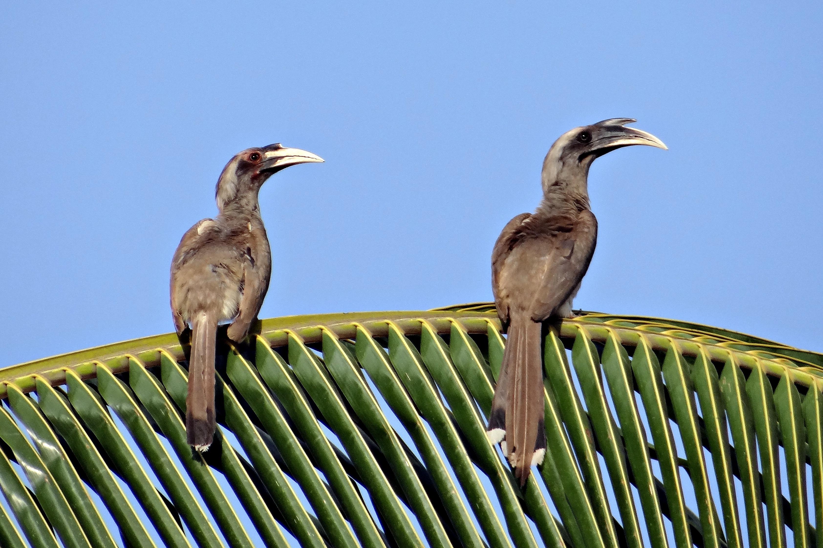 Птицы в индии фото и название