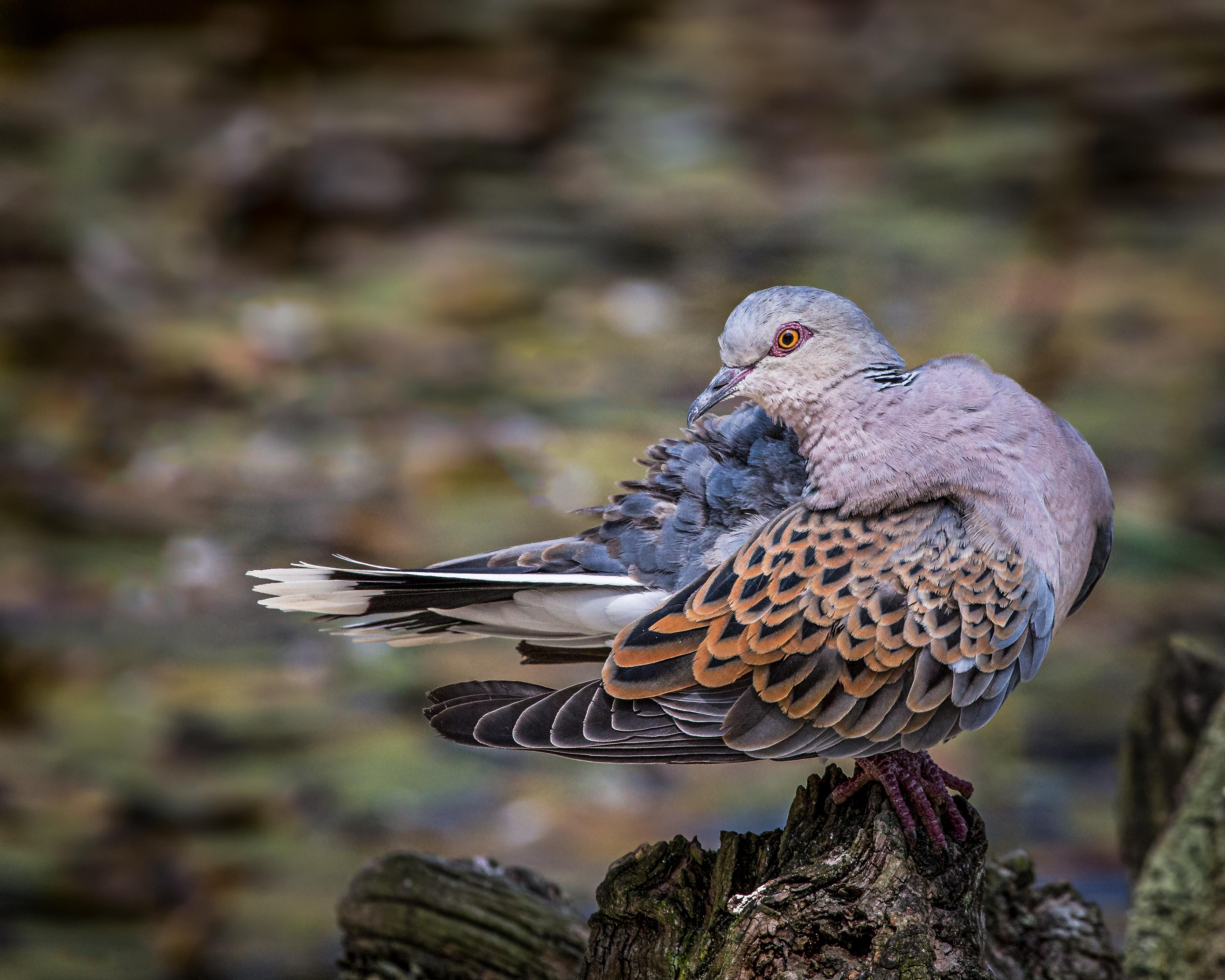 Hard Rock vtáky