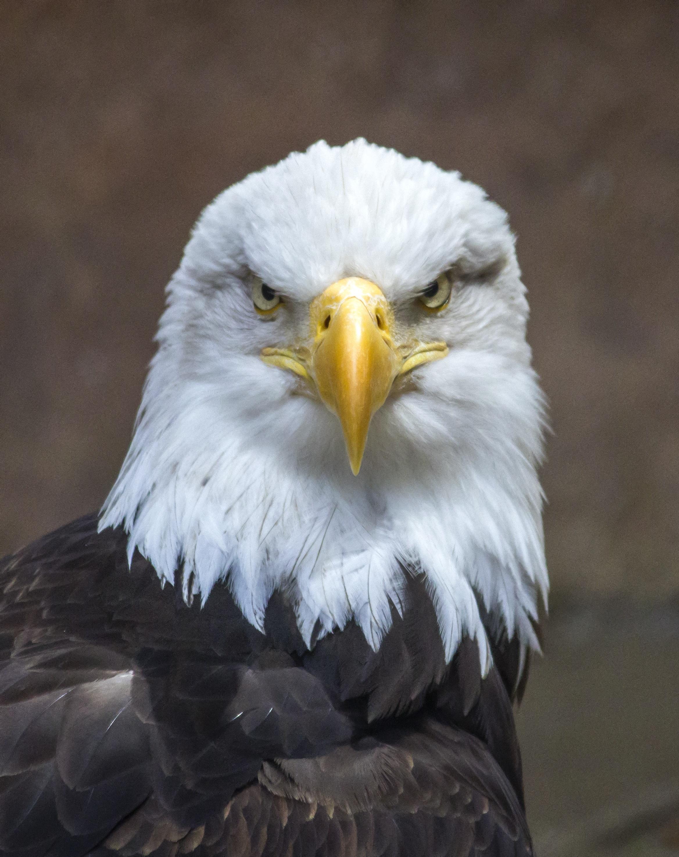 Free Images Nature Wing Wildlife Beak Symbol Usa America