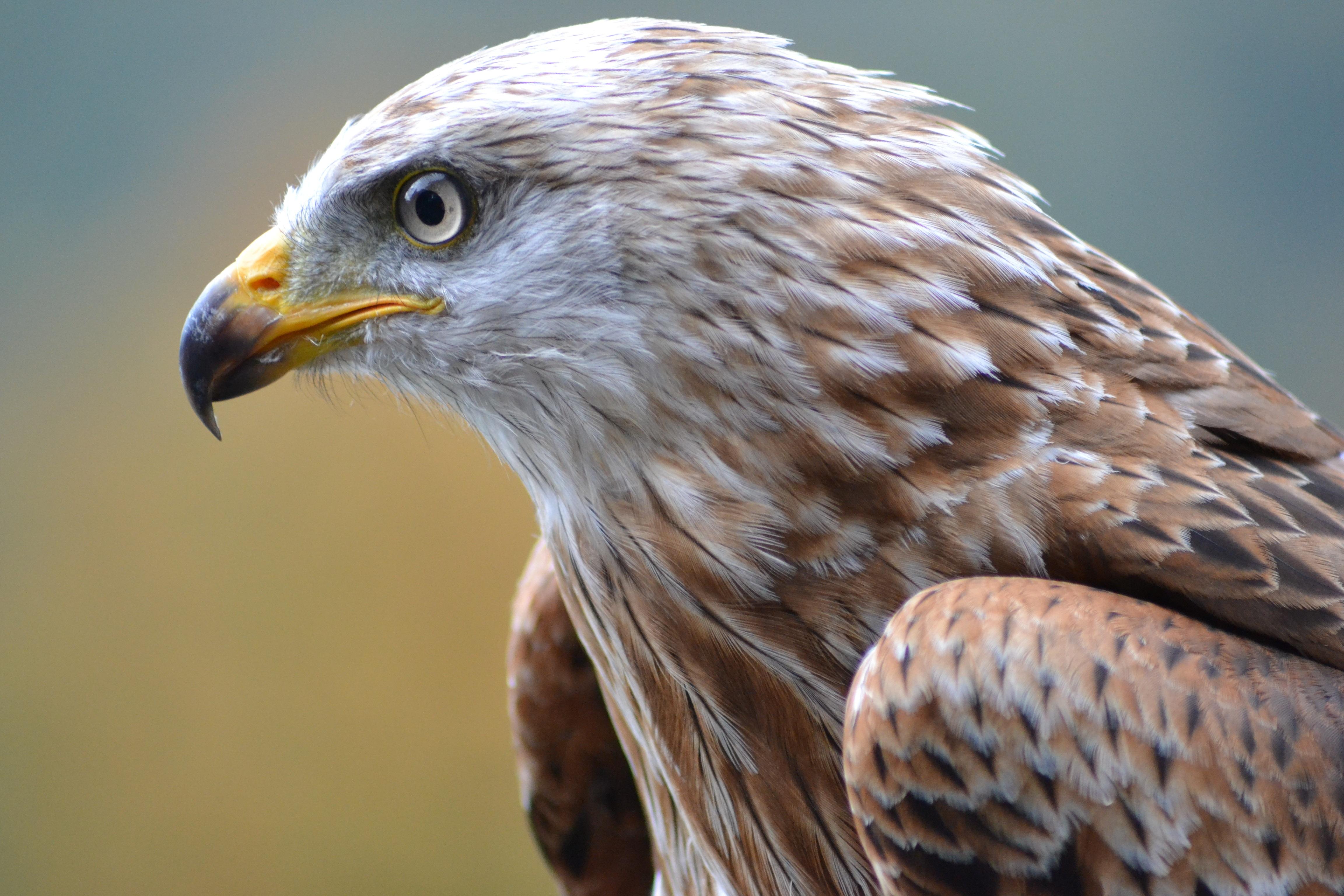 banco de imagens natureza pássaro asa animais selvagens