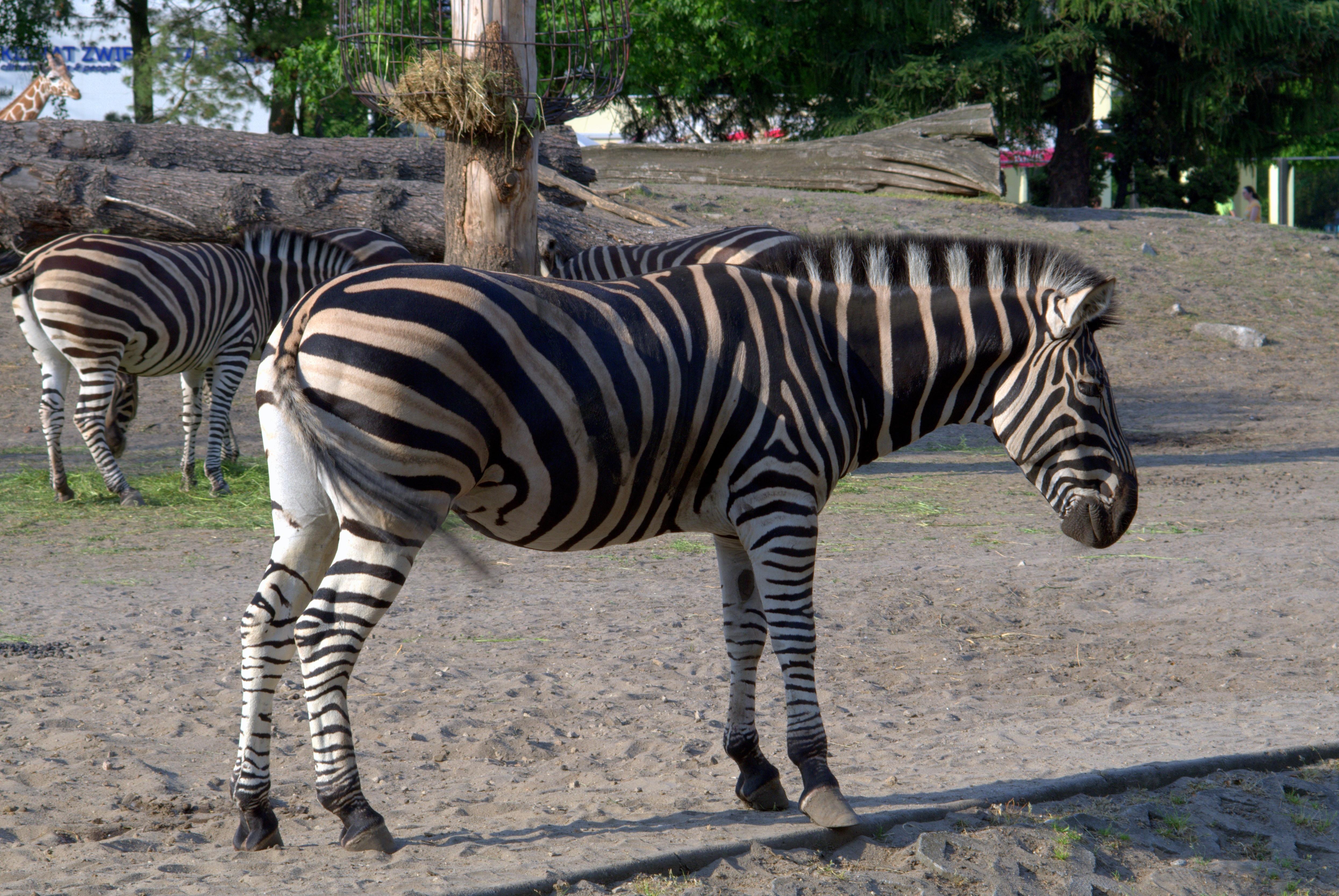 15++ Hewan hewan buas afrika terupdate