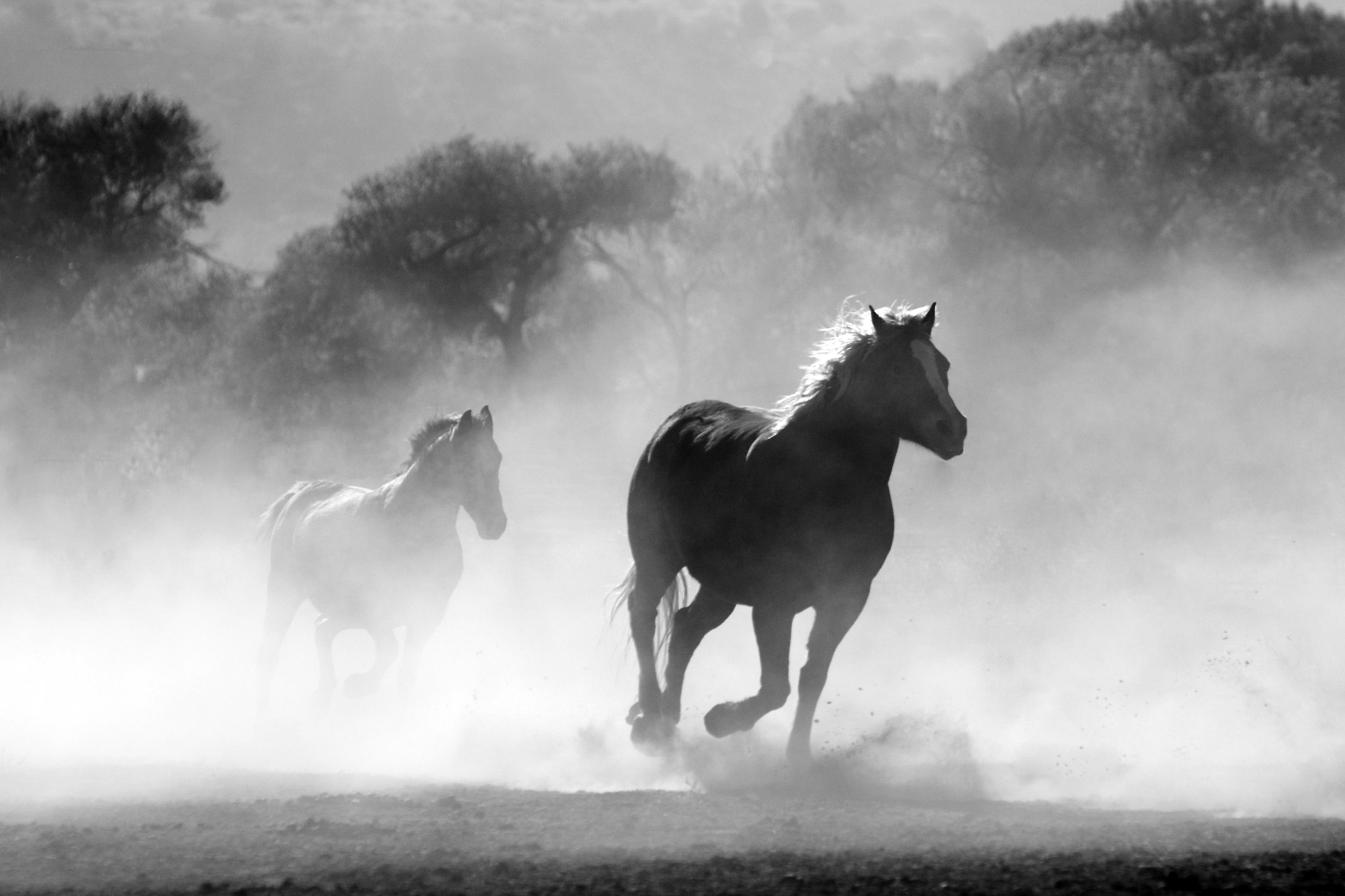 free images nature black and white fog mist animal motion
