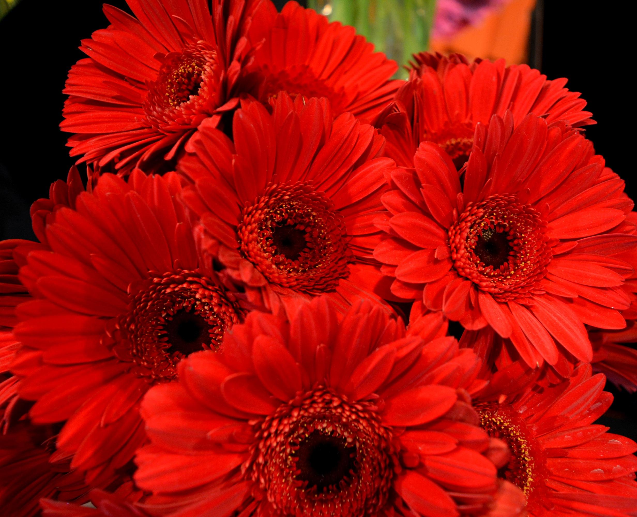 красные только красные цветы фото долгое