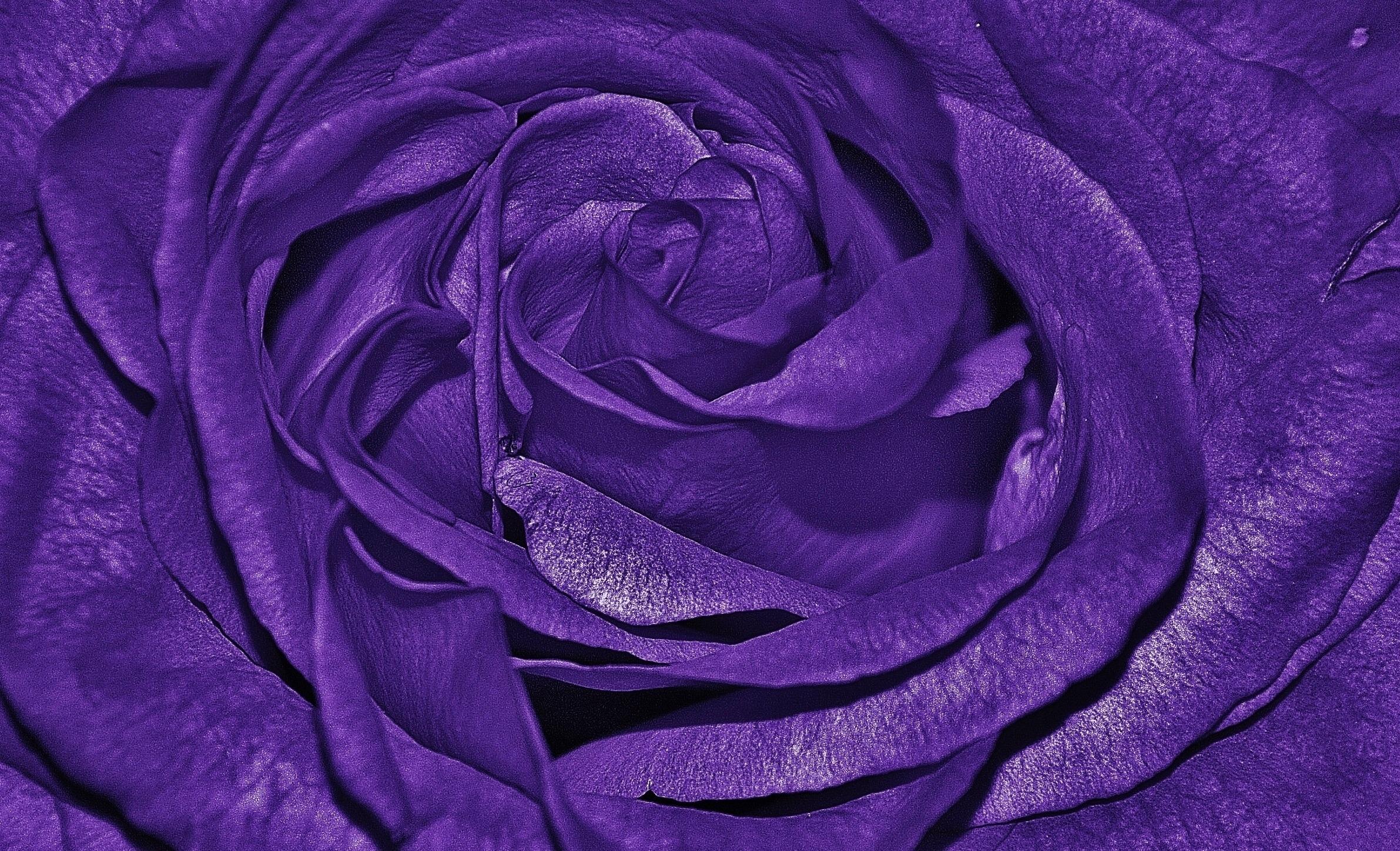 kostenlose foto natur schwarz und wei wei blume lila bl tenblatt liebe makro blau. Black Bedroom Furniture Sets. Home Design Ideas