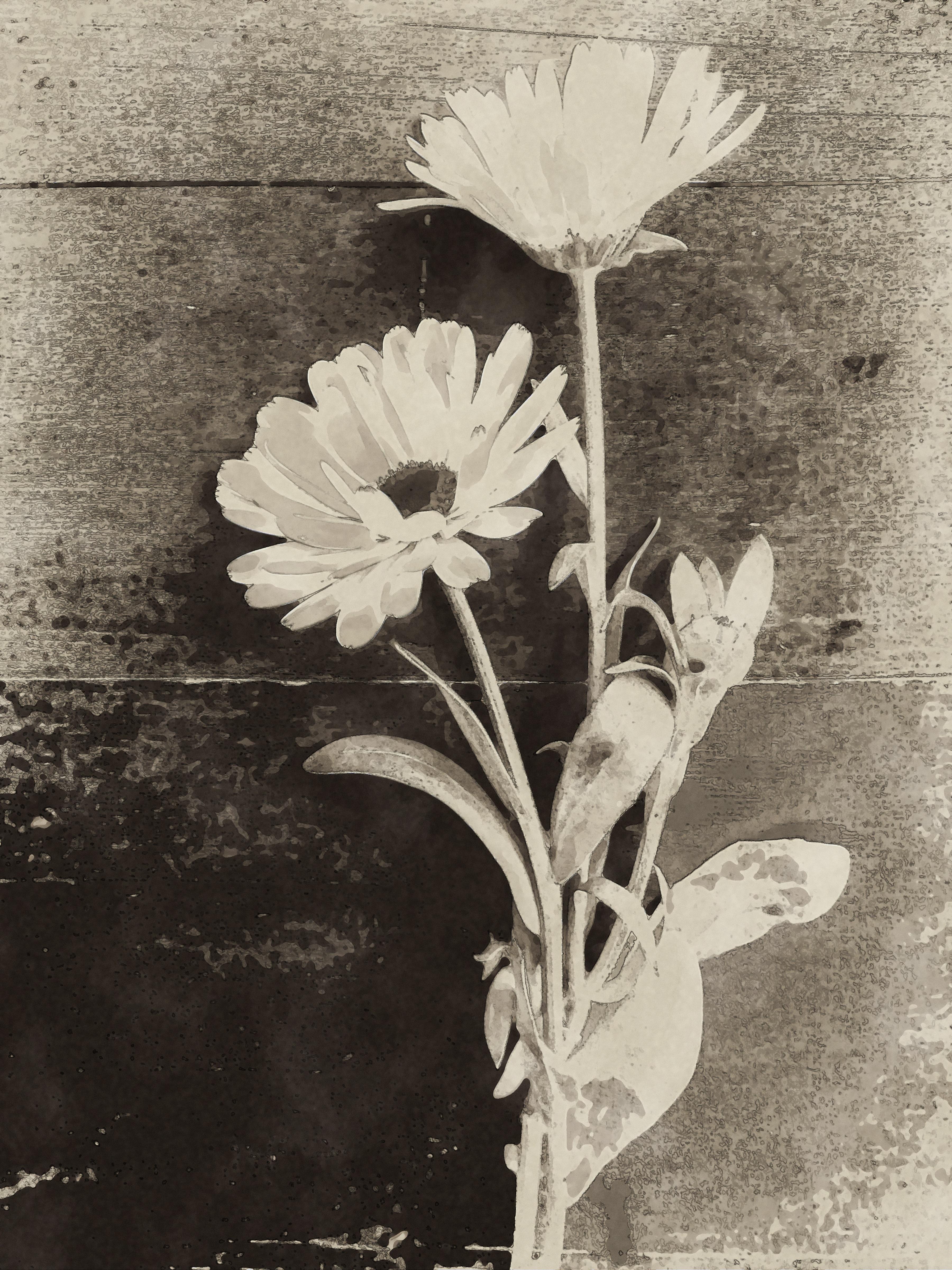 Gambar Alam Hitam Dan Putih Menanam Daun Botani Satu
