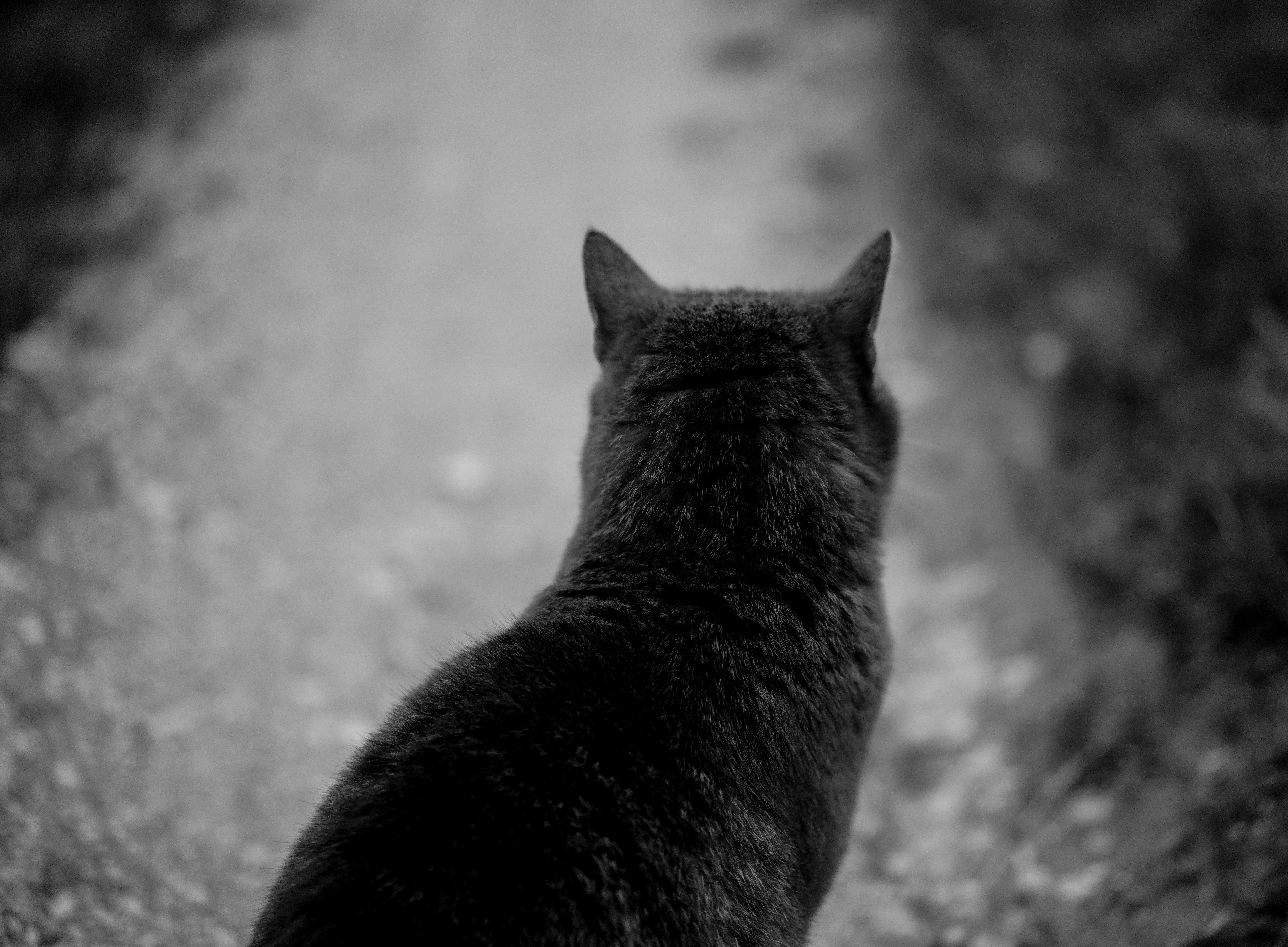 čierna mačička mokré pic dievčatá chceli dať hlavu