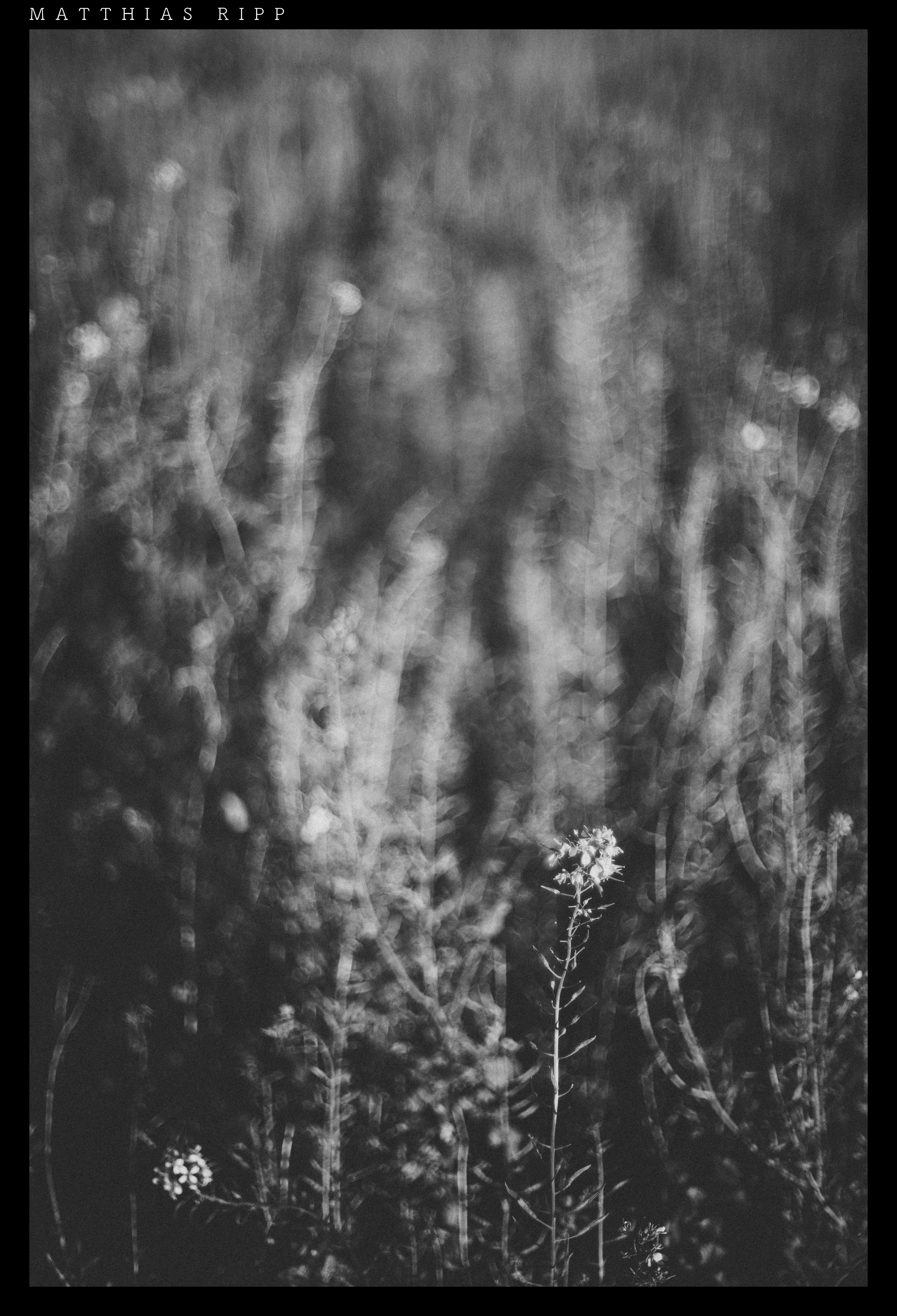 Kostenlose foto : Natur, Schwarz und weiß, Weiß, Textur, Blume ...