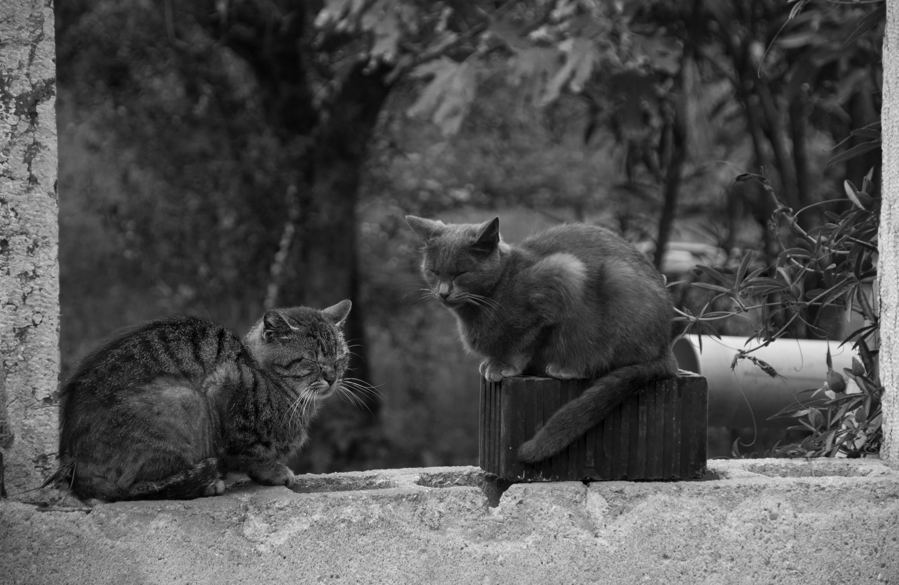 Tesné mačička detailné