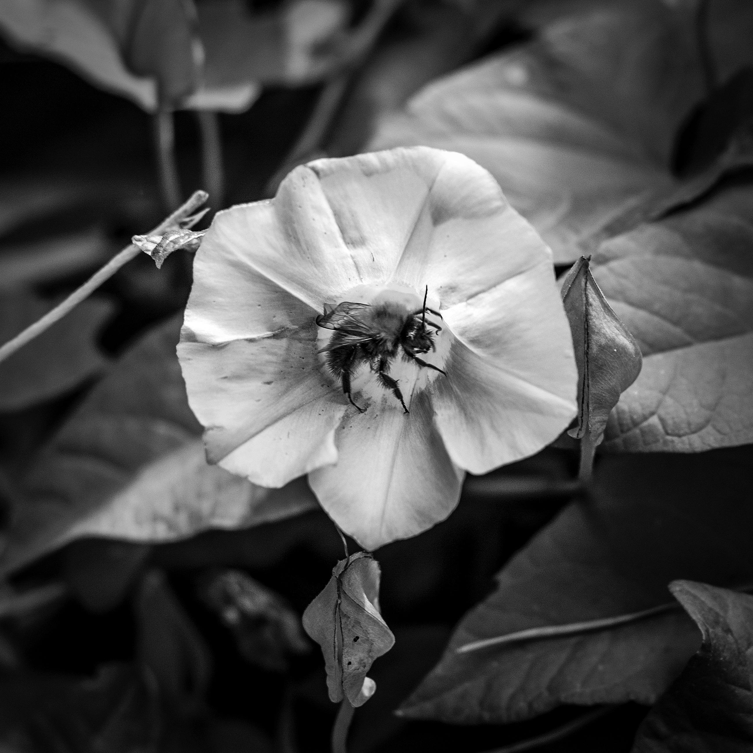 Free Images Nature Blossom Black And White Leaf Flower Petal