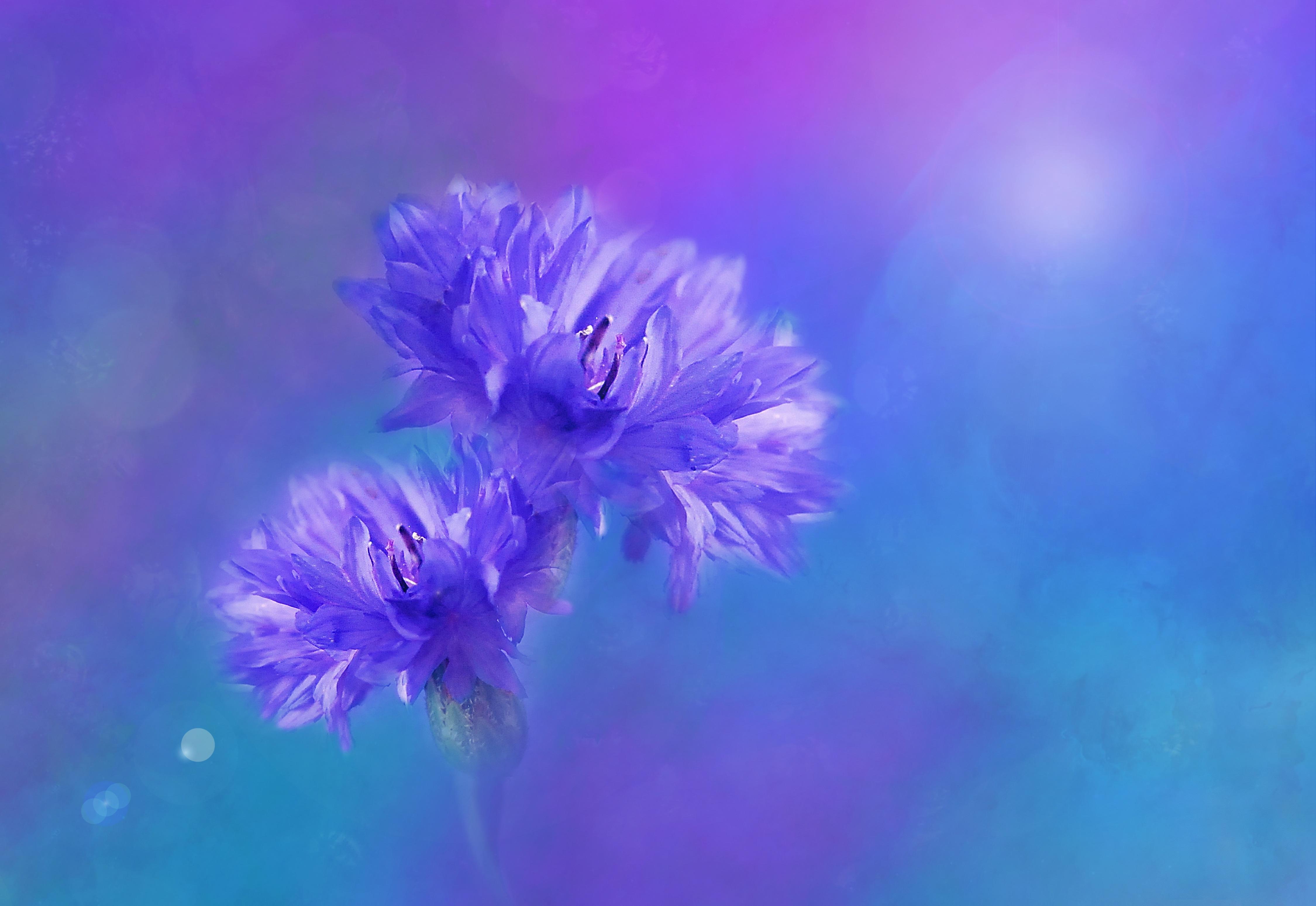 Free Images Nature Blossom Bokeh Sky Purple Petal Bloom