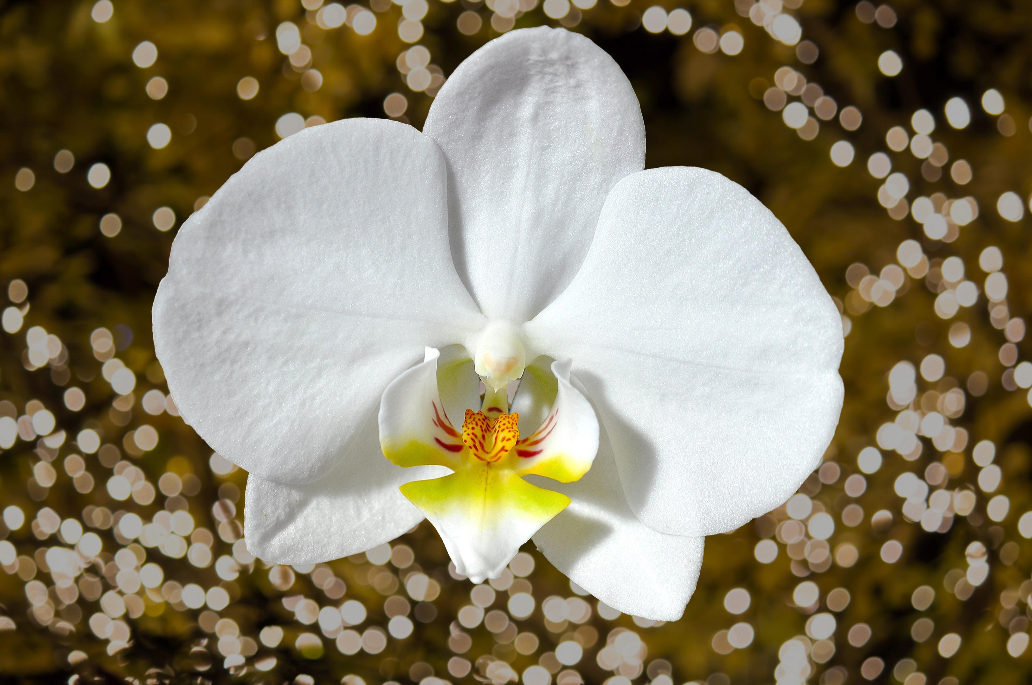 были фото орхидей с хорошим разрешением обычном состоянии она