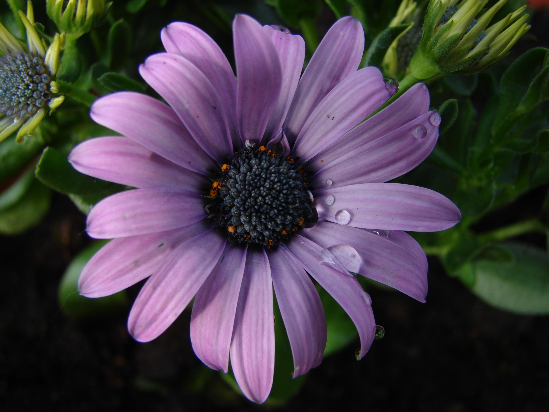 Free Images Nature Blossom Water Drop Flower Petal Raindrop