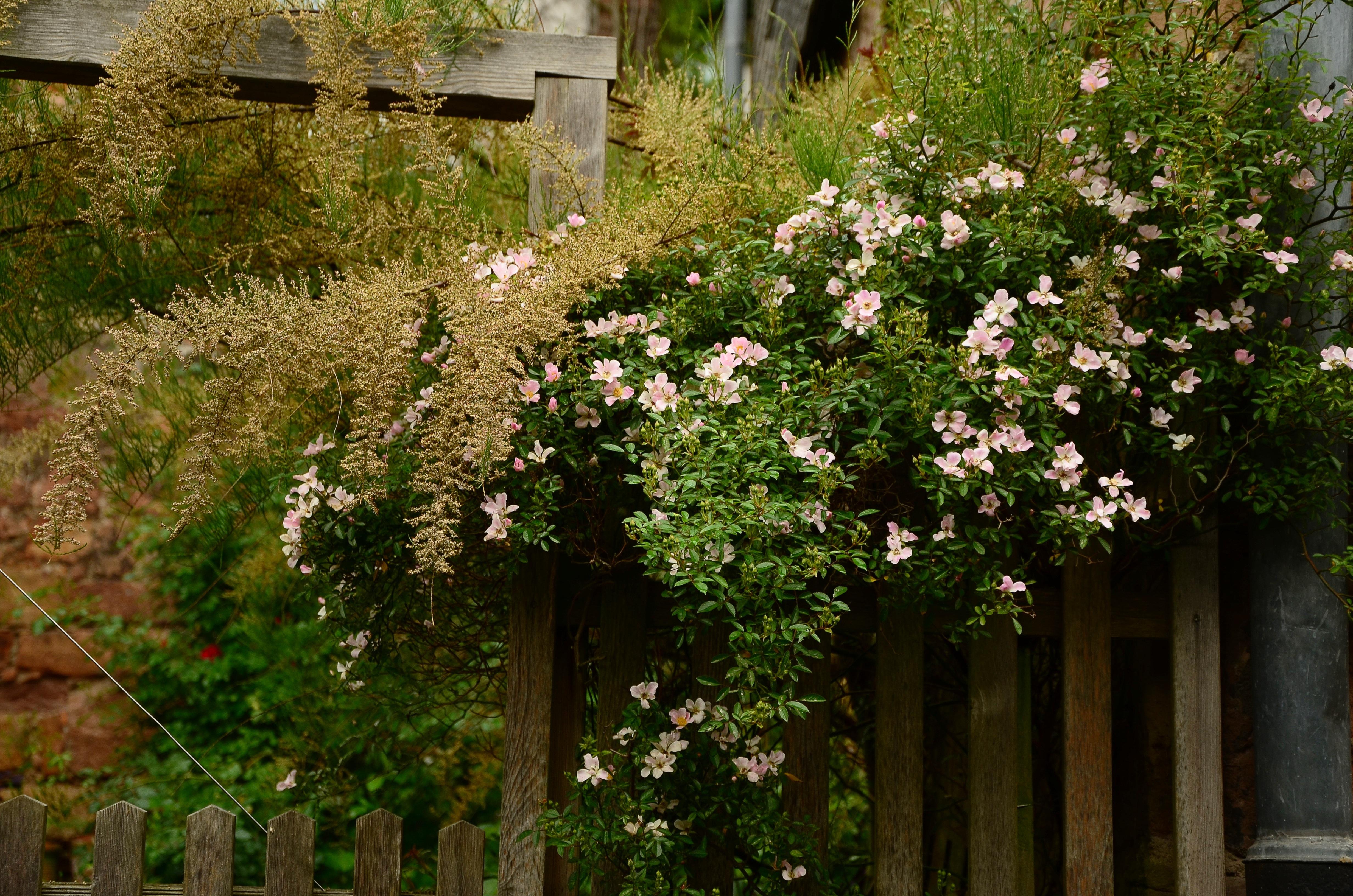 Images gratuites la nature fleur floraison surpeupl for Jardin romantique francais