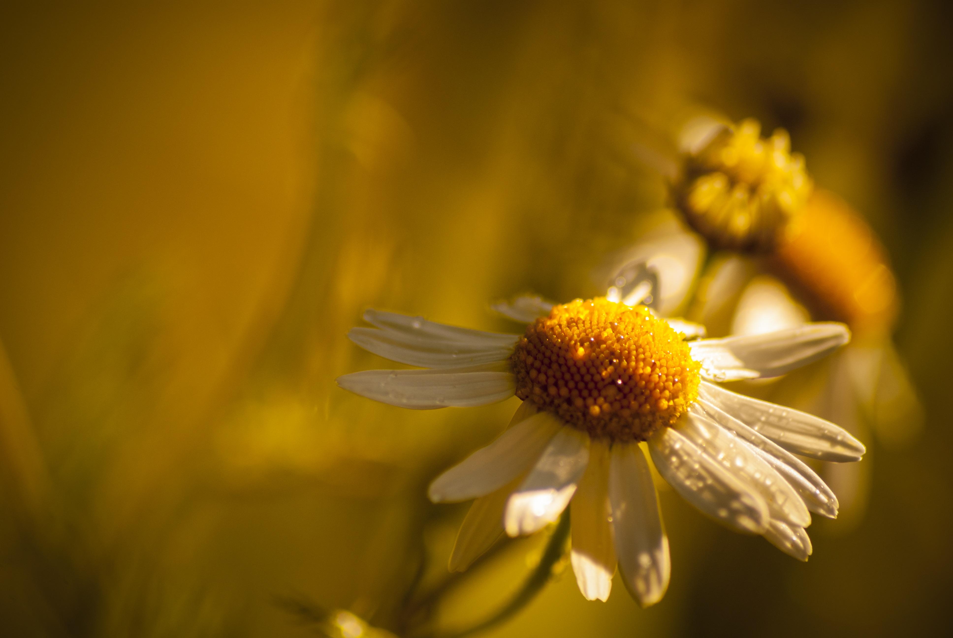 Free Images Nature Blossom Light Bokeh Field Sunlight Leaf