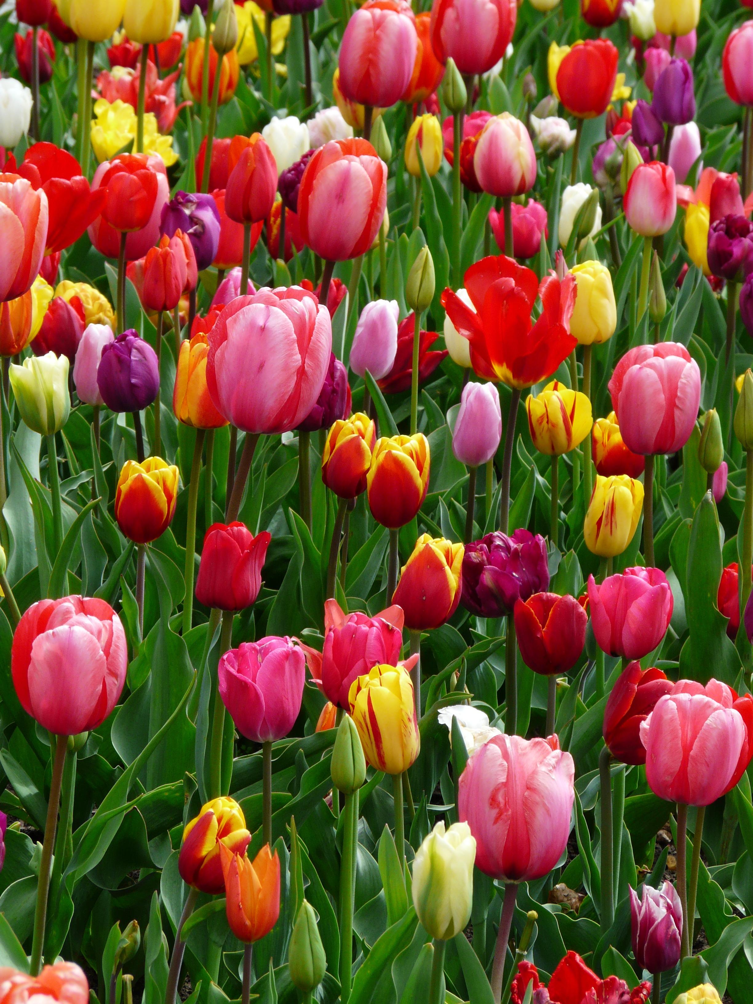 images gratuites la nature fleur lumi re p tale. Black Bedroom Furniture Sets. Home Design Ideas