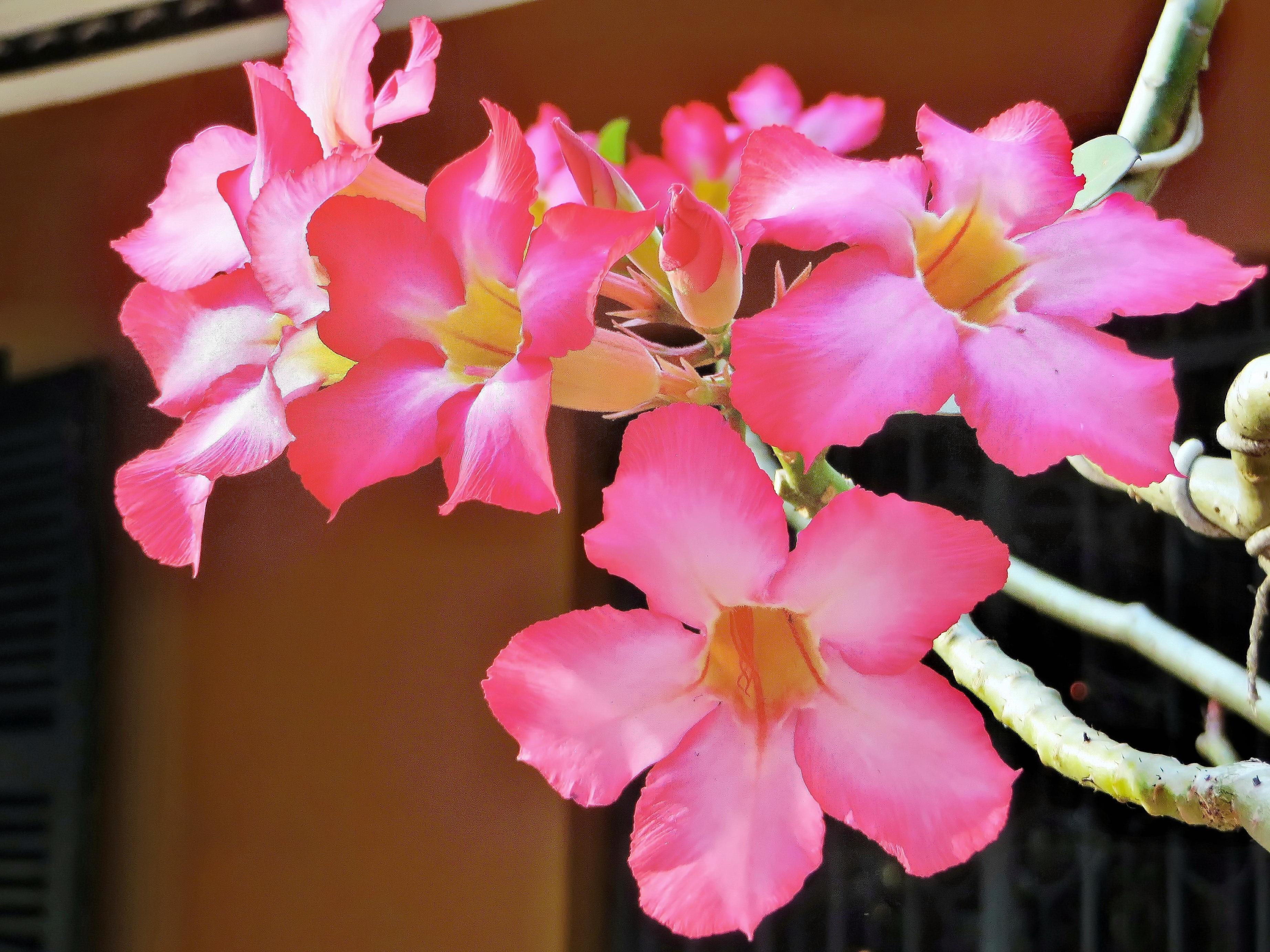 Free Images Nature Blossom Light Petal Botany Flora Flowers