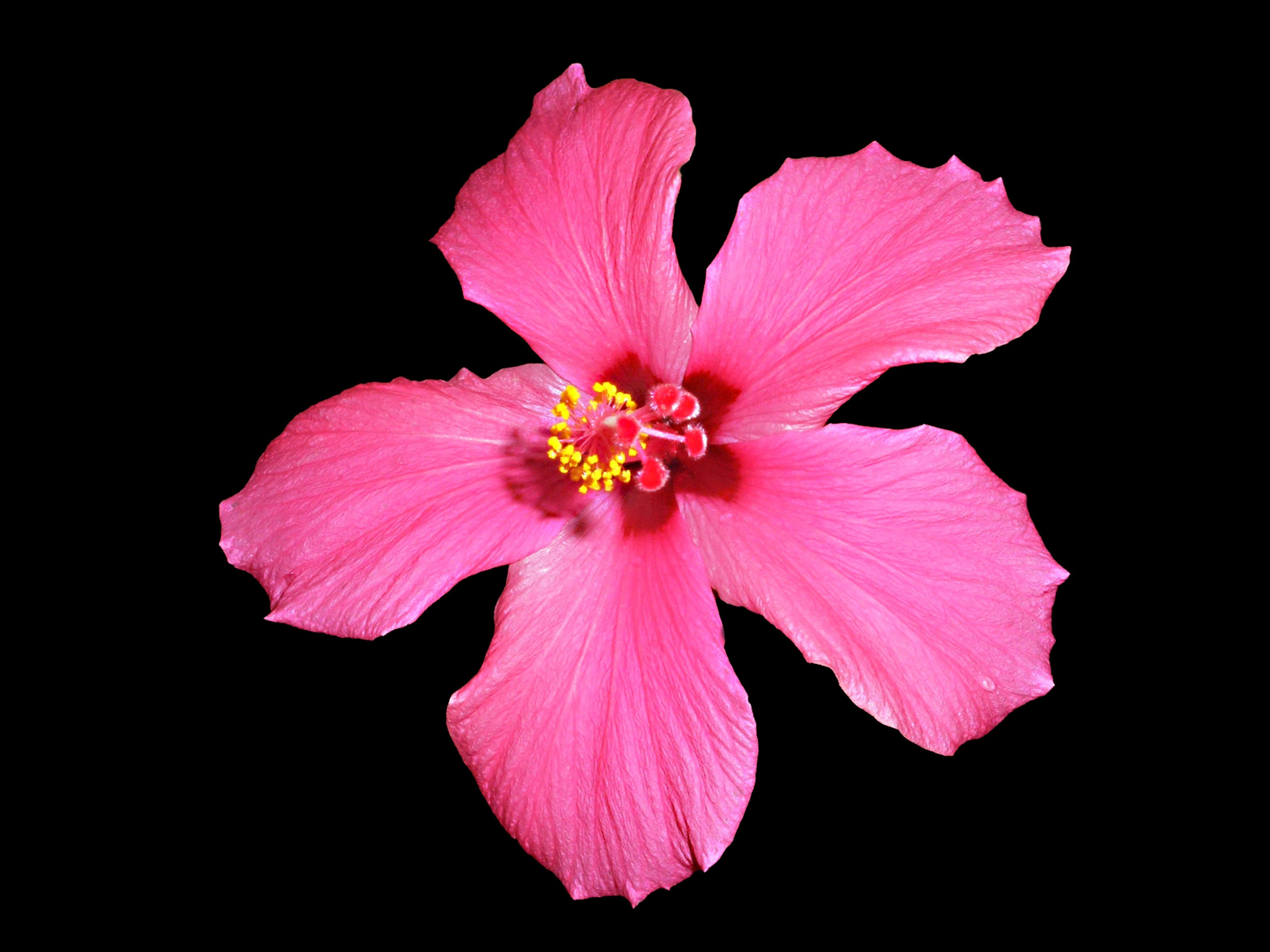 Free Images Nature Blossom Light Flower Petal Floral Spring