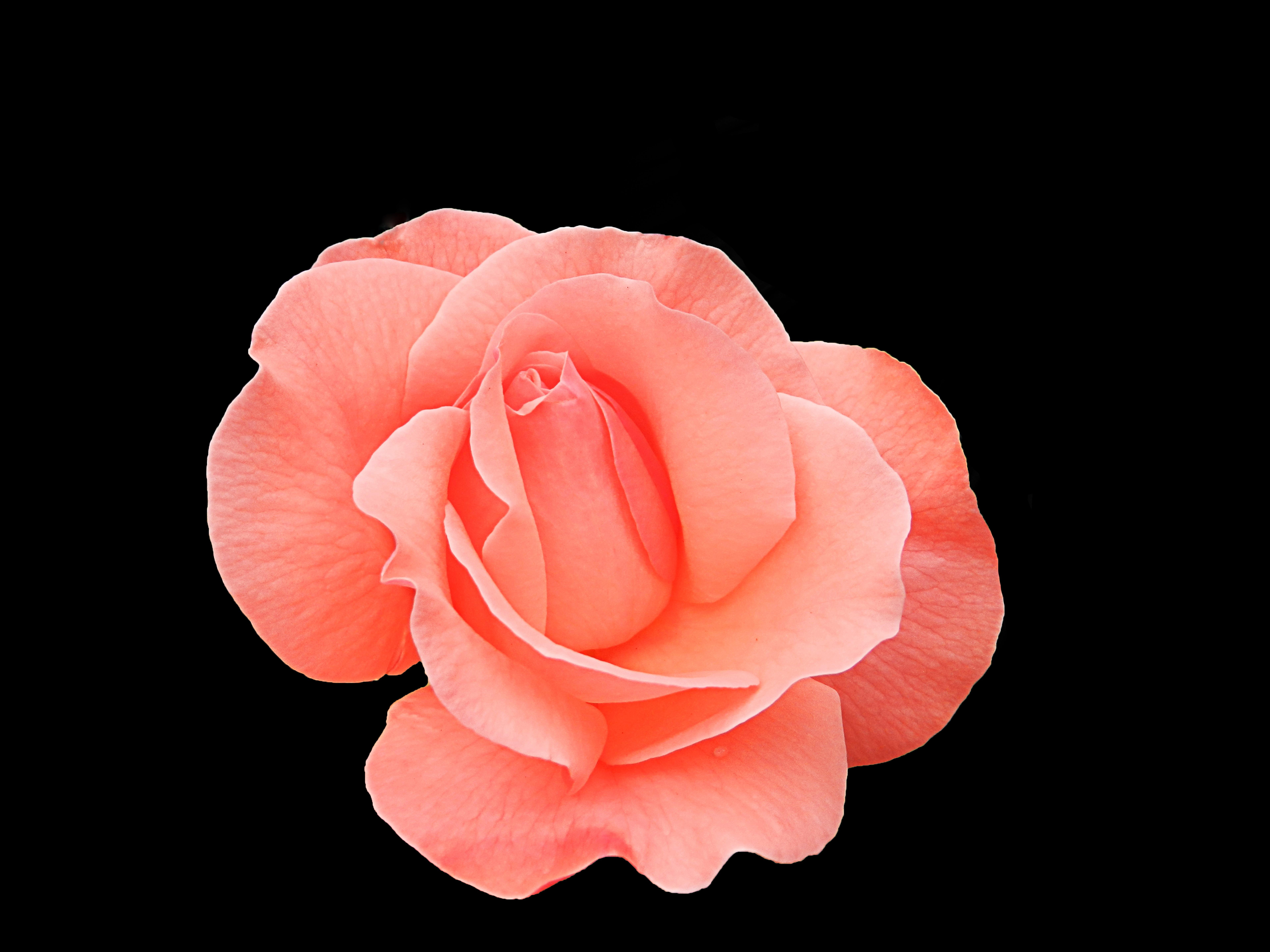 Free Images : nature, blossom, light, flower, petal, interior ...