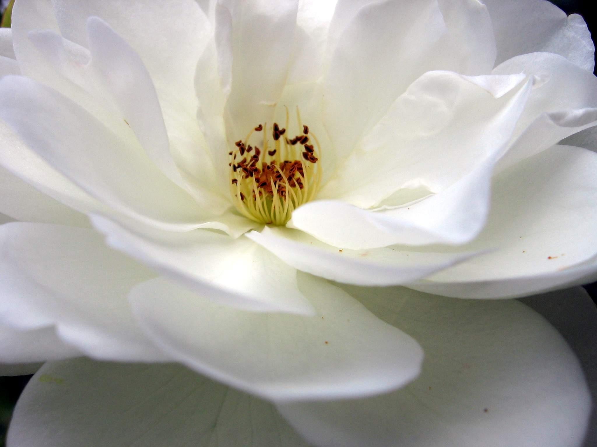 Free Images Nature Blossom Light White Flower Petal Bloom