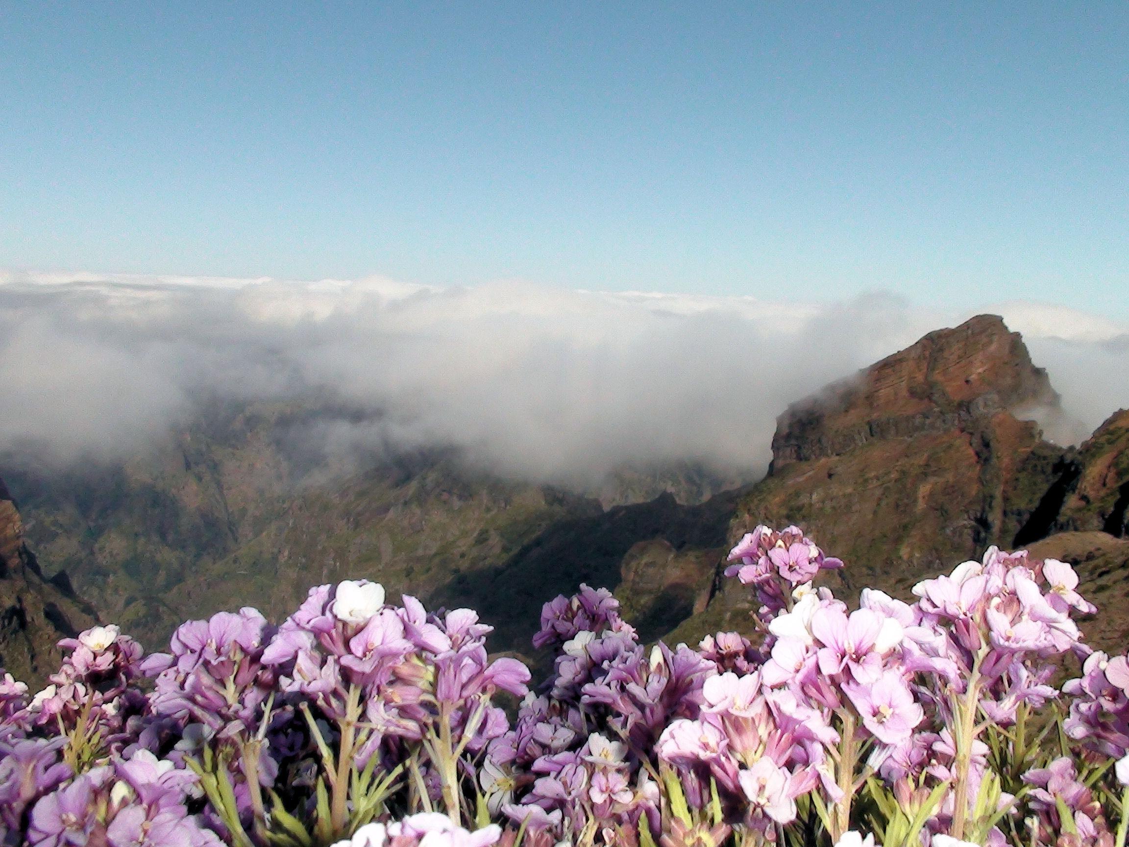 Banco De Imagens Natureza Flor Montanha Plantar Prado Flor