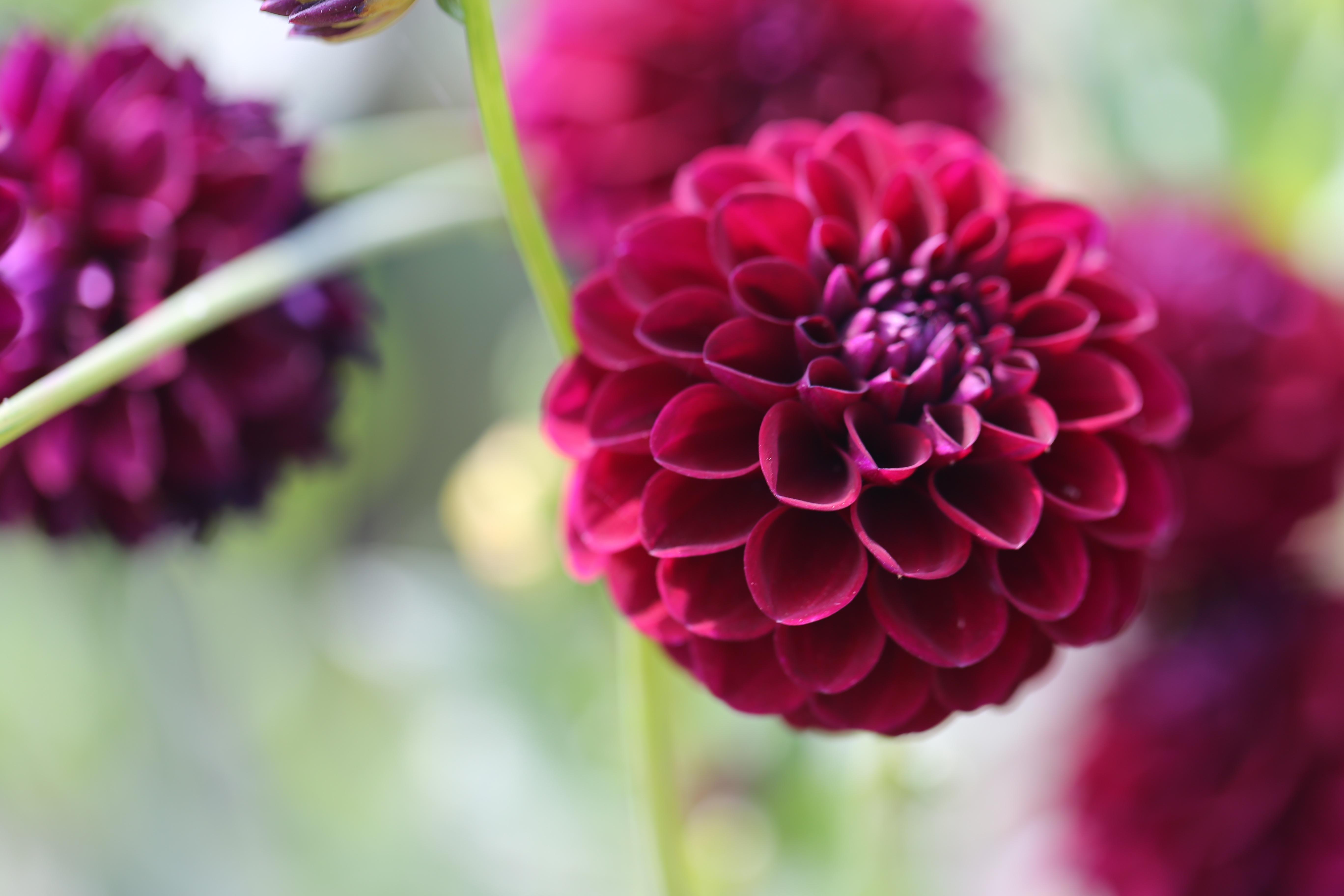 Красный цветок питомник