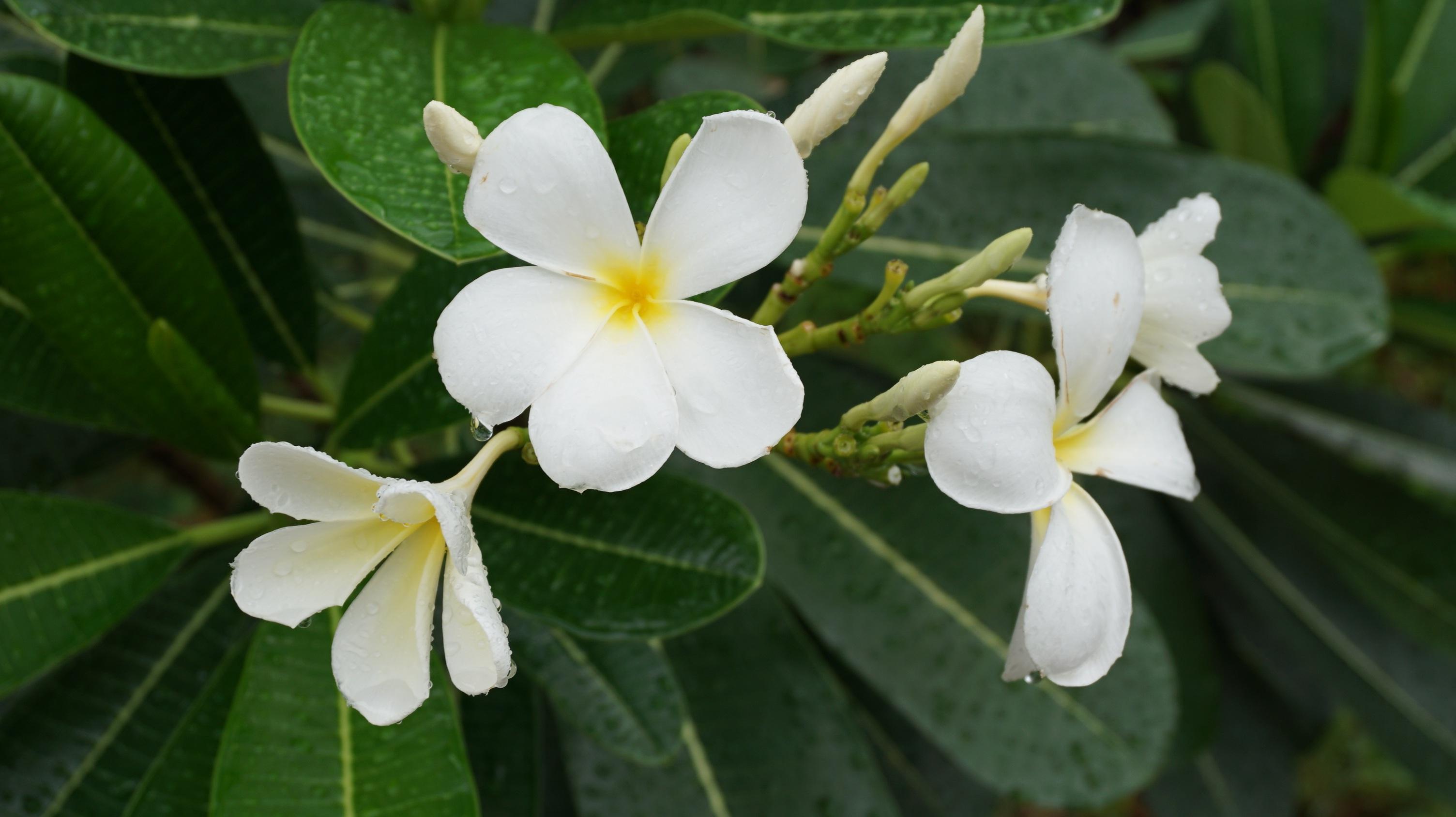 Free Images Nature Blossom Open Flower Petal Botany Flora