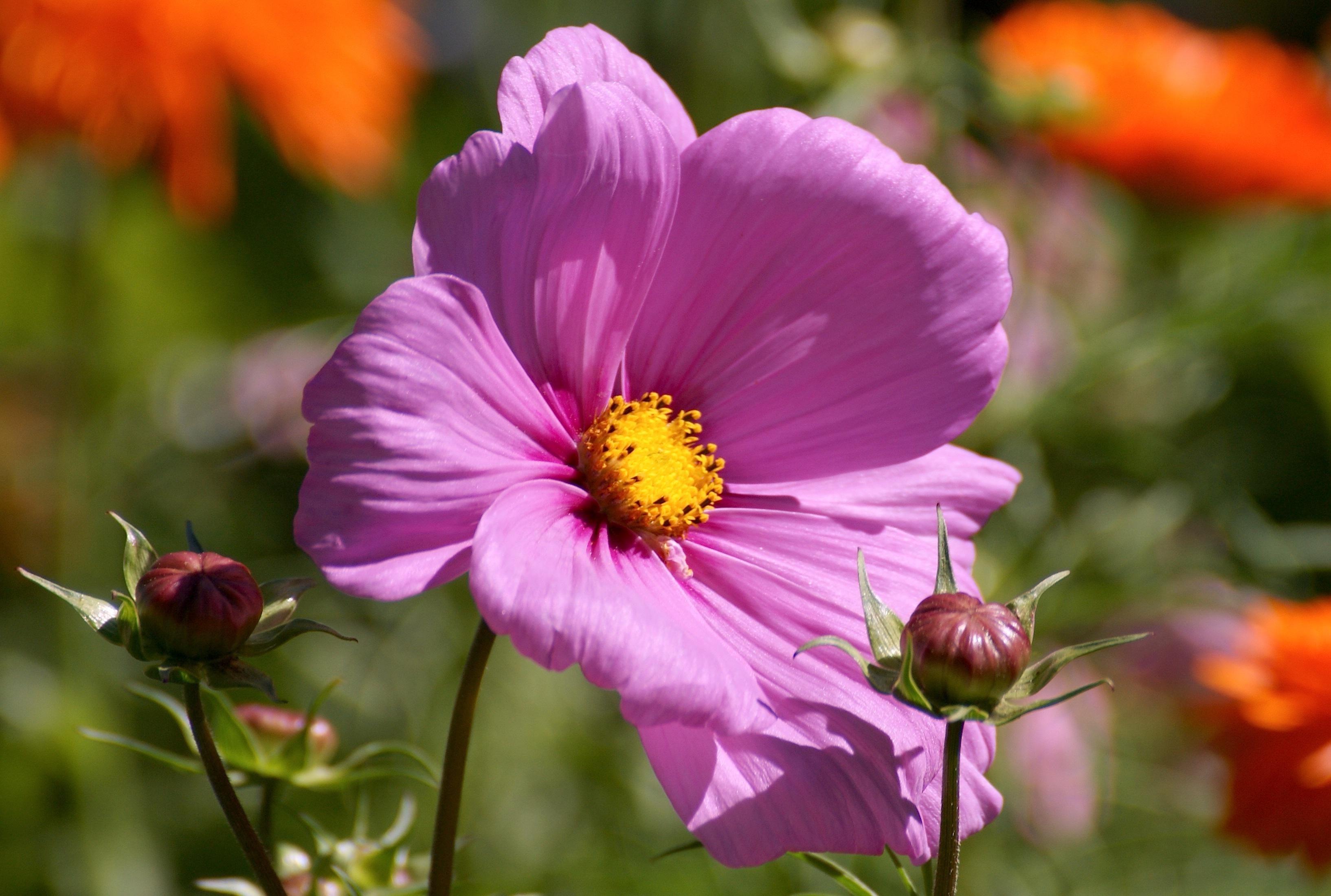 Free Images Nature Blossom Petal Bloom Botany Close Flora