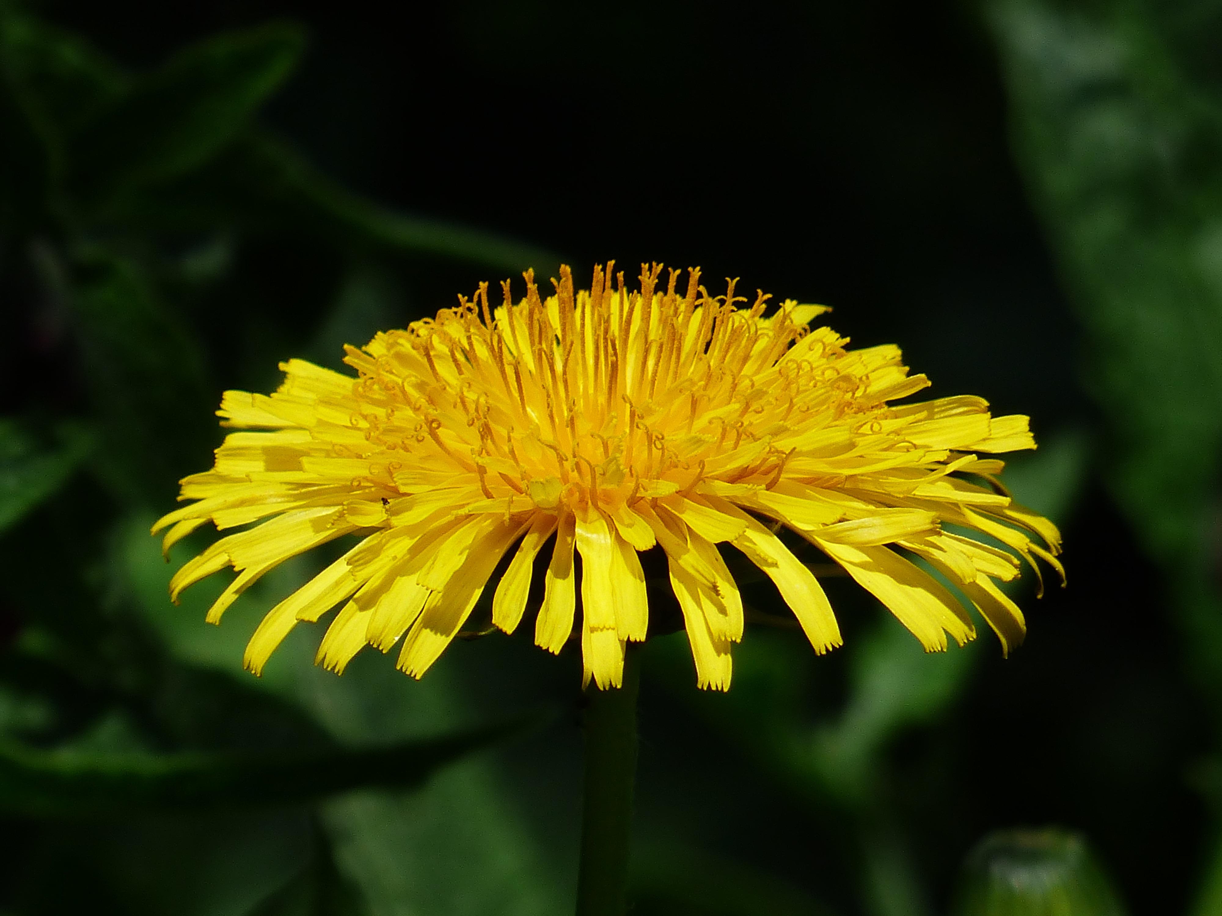 Free Images Nature Blossom Petal Bloom Summer Green Money