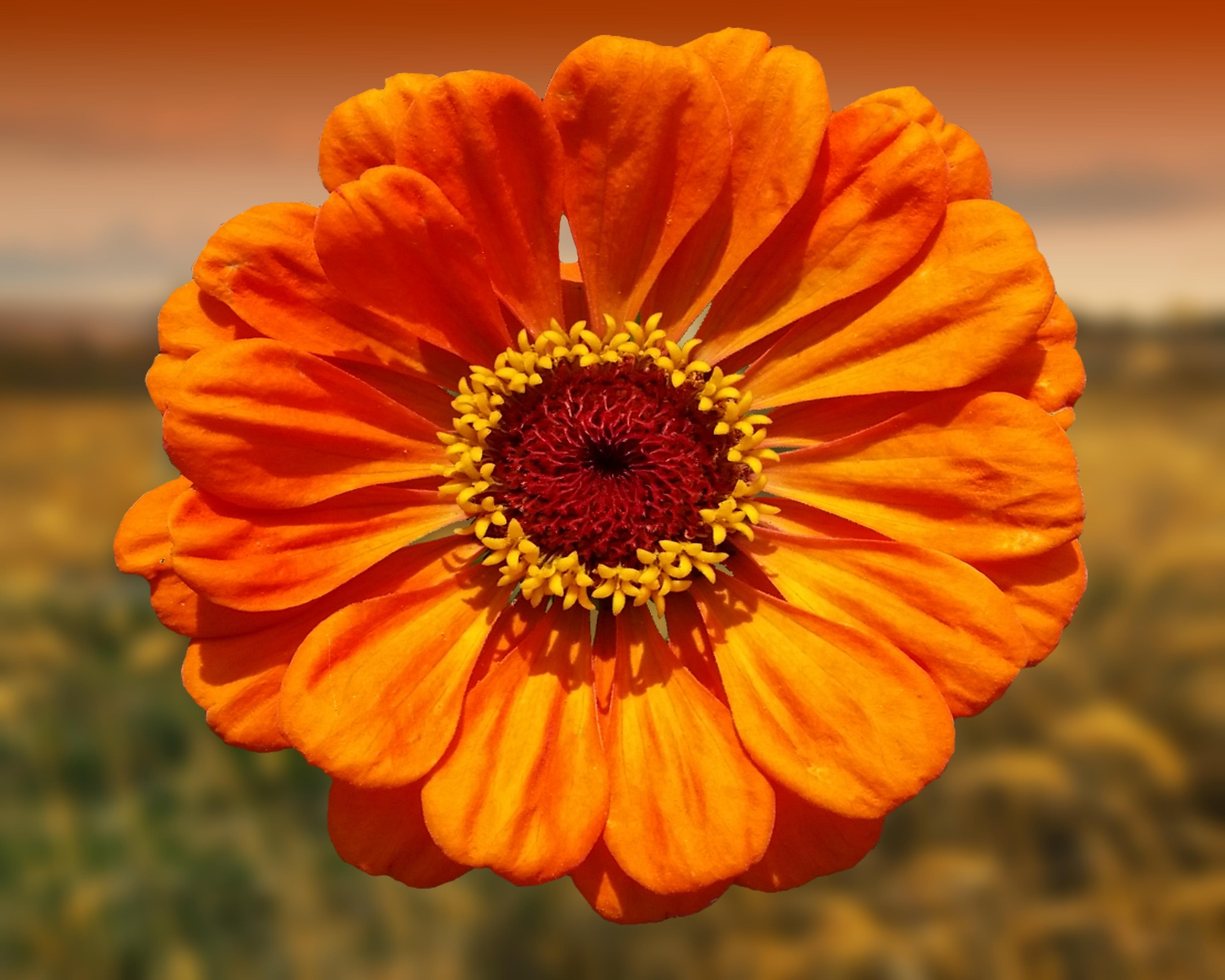 Картинки желто оранжевых цветов