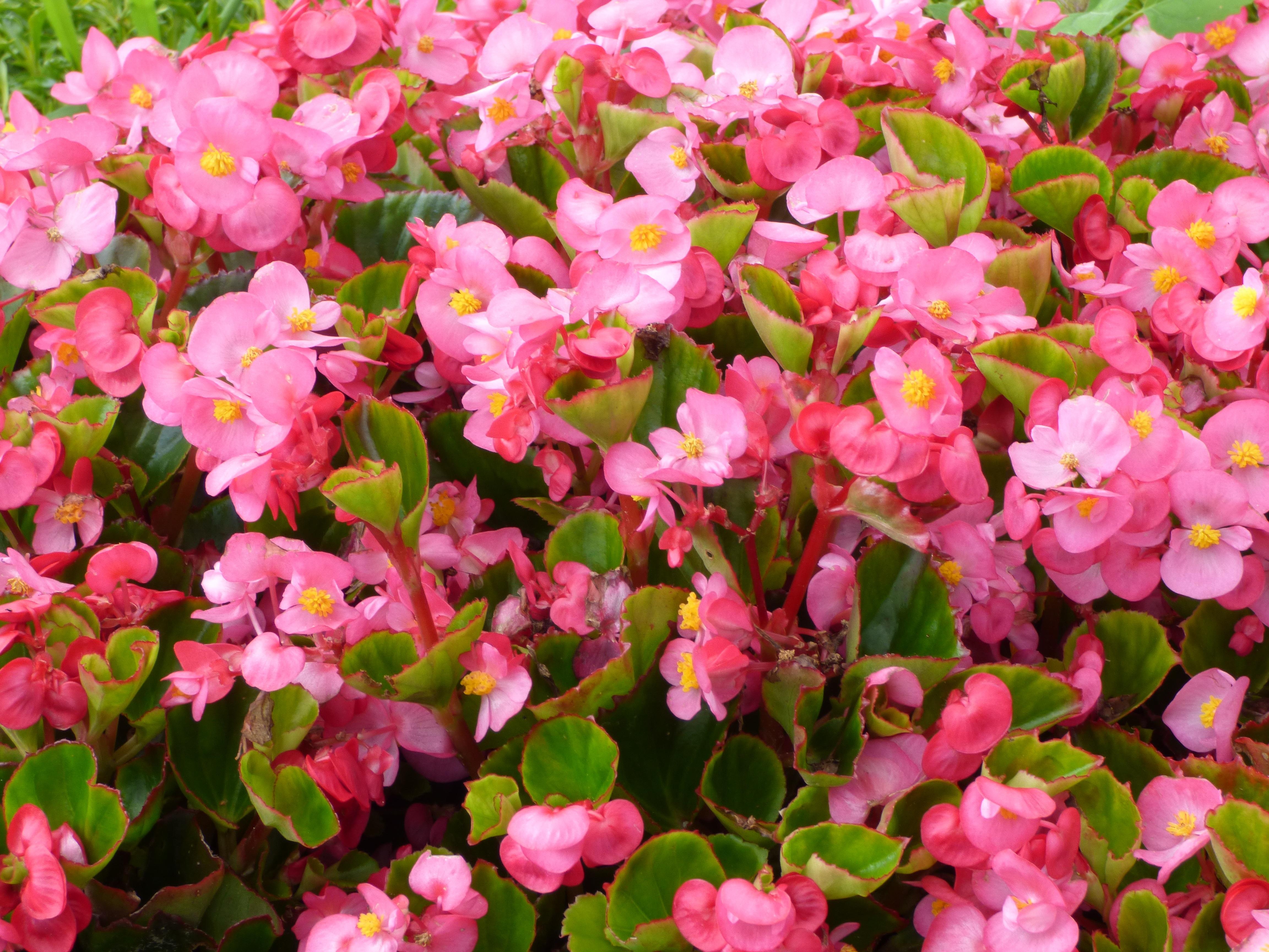 Gratuites la nature fleur champ pétale botanique