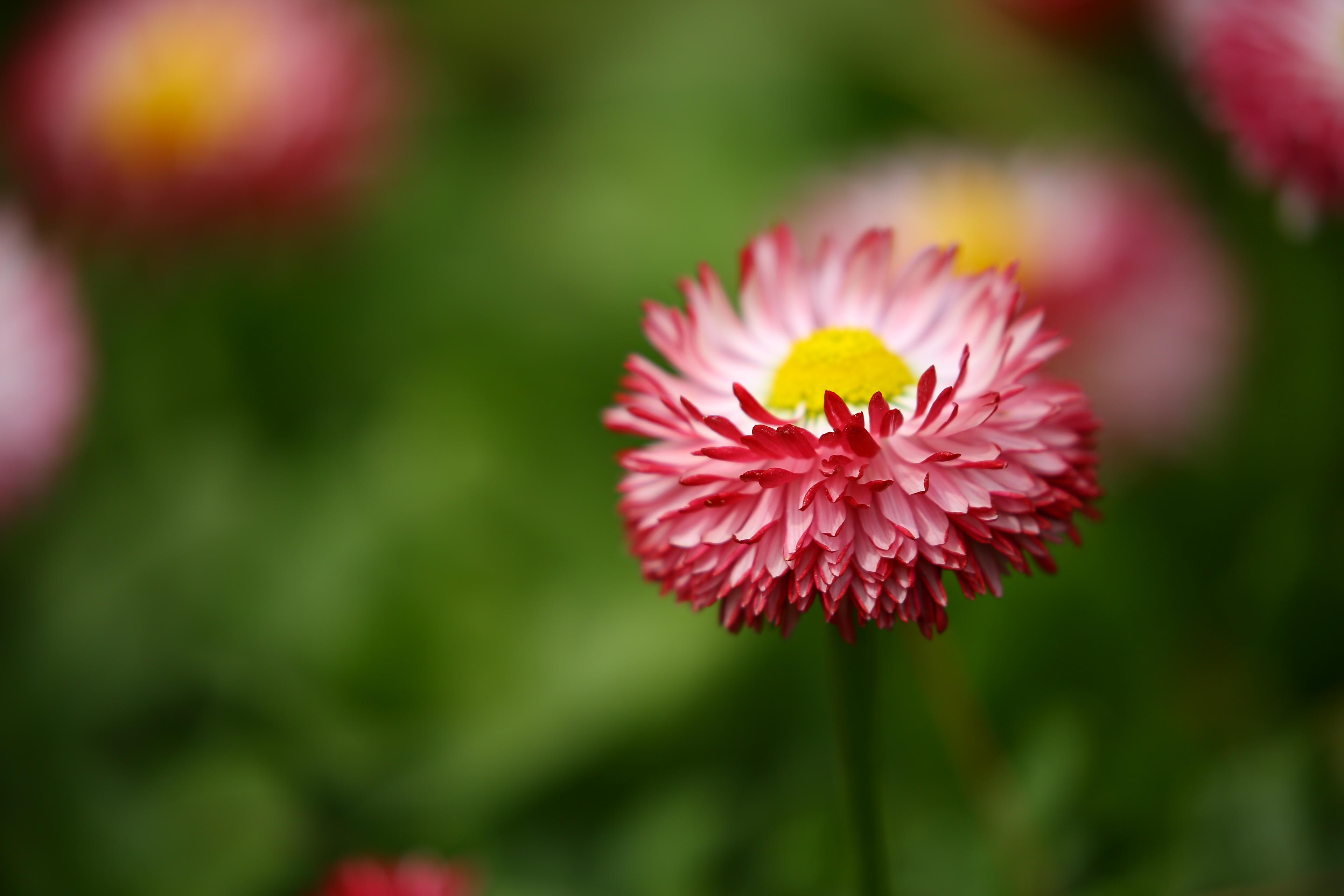 бесплатно картинка ботаника скачать