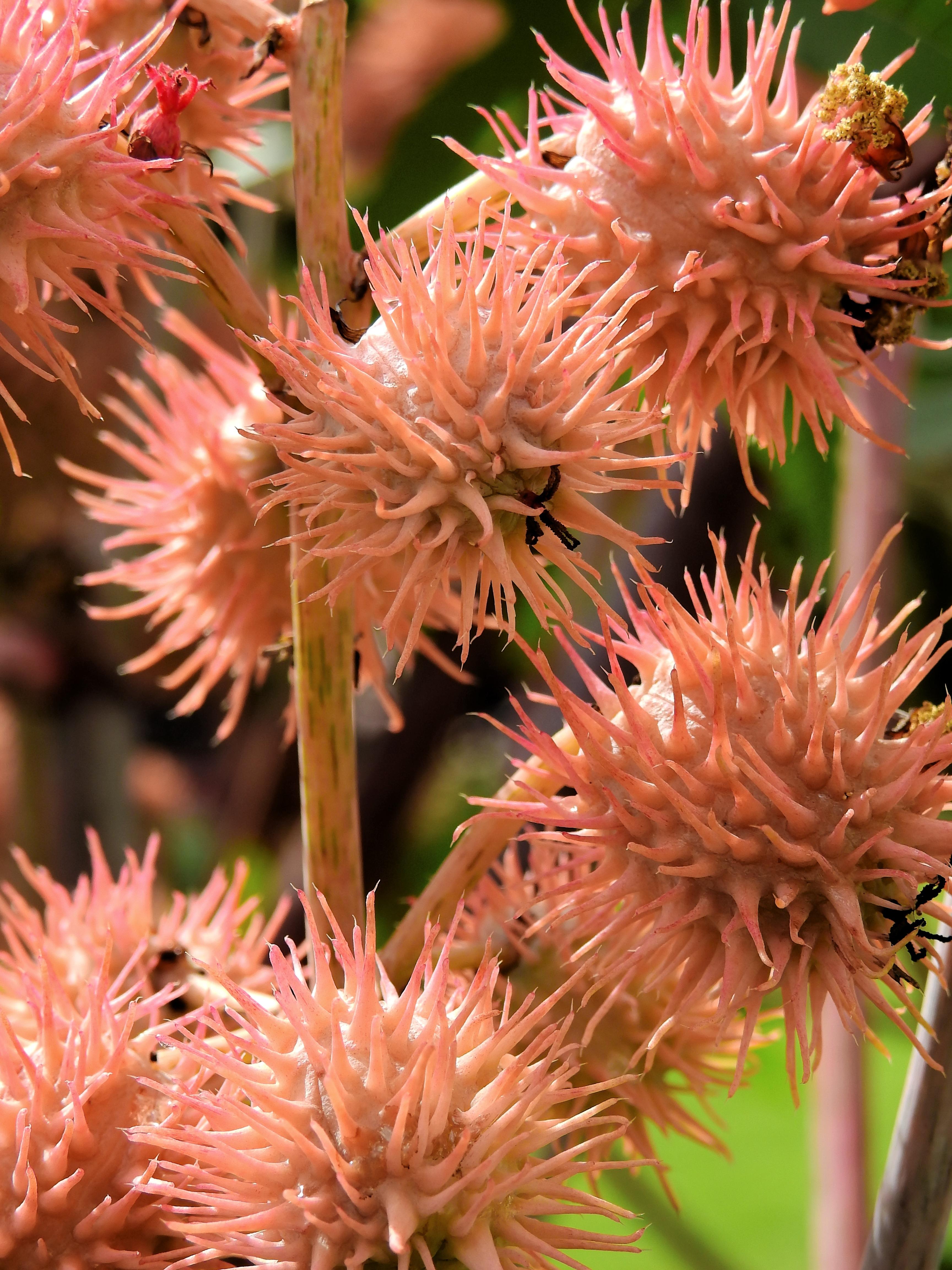 images gratuites : la nature, fleur, floraison, herbe, botanique
