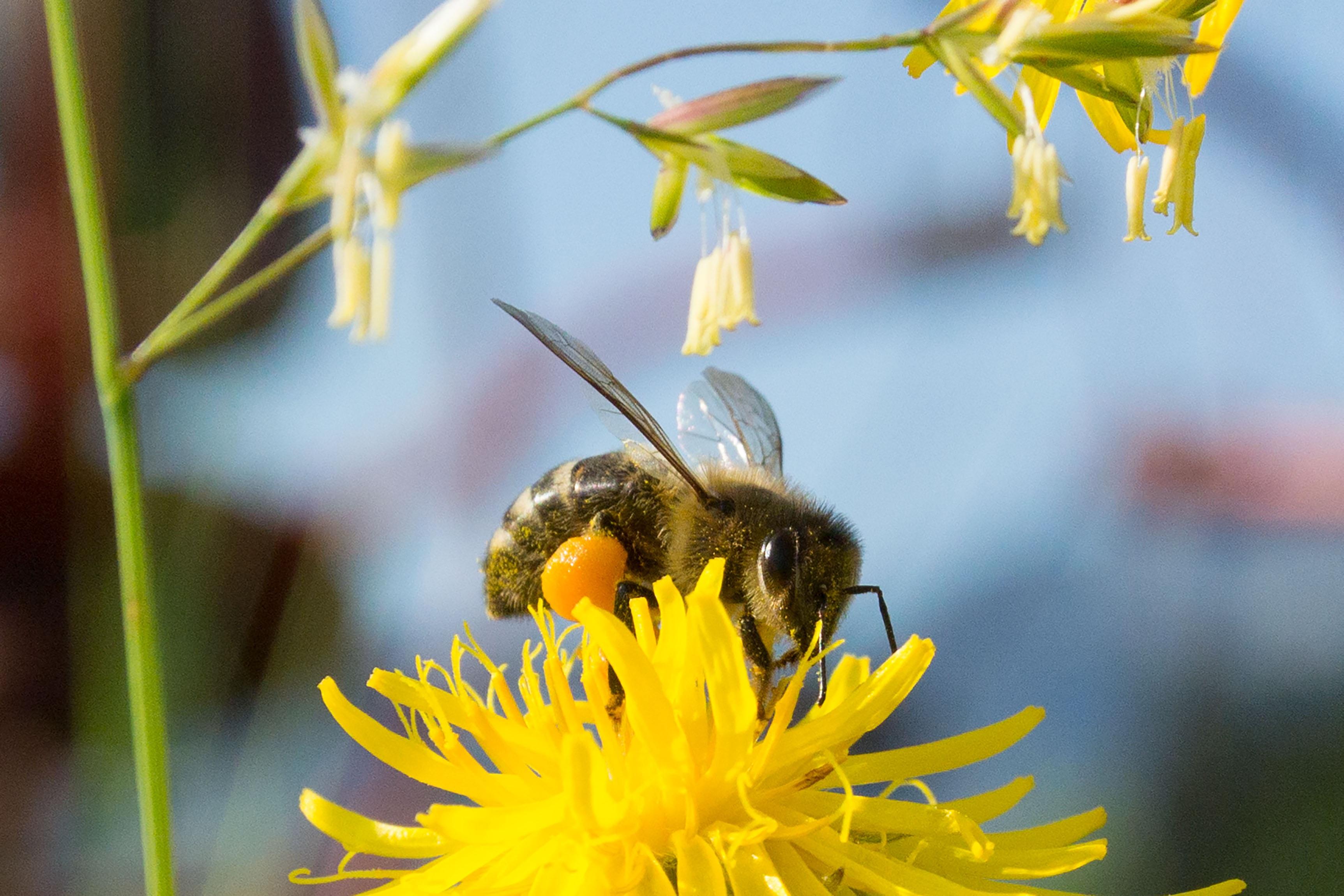 как пчелы в апреле носят мед фото темный