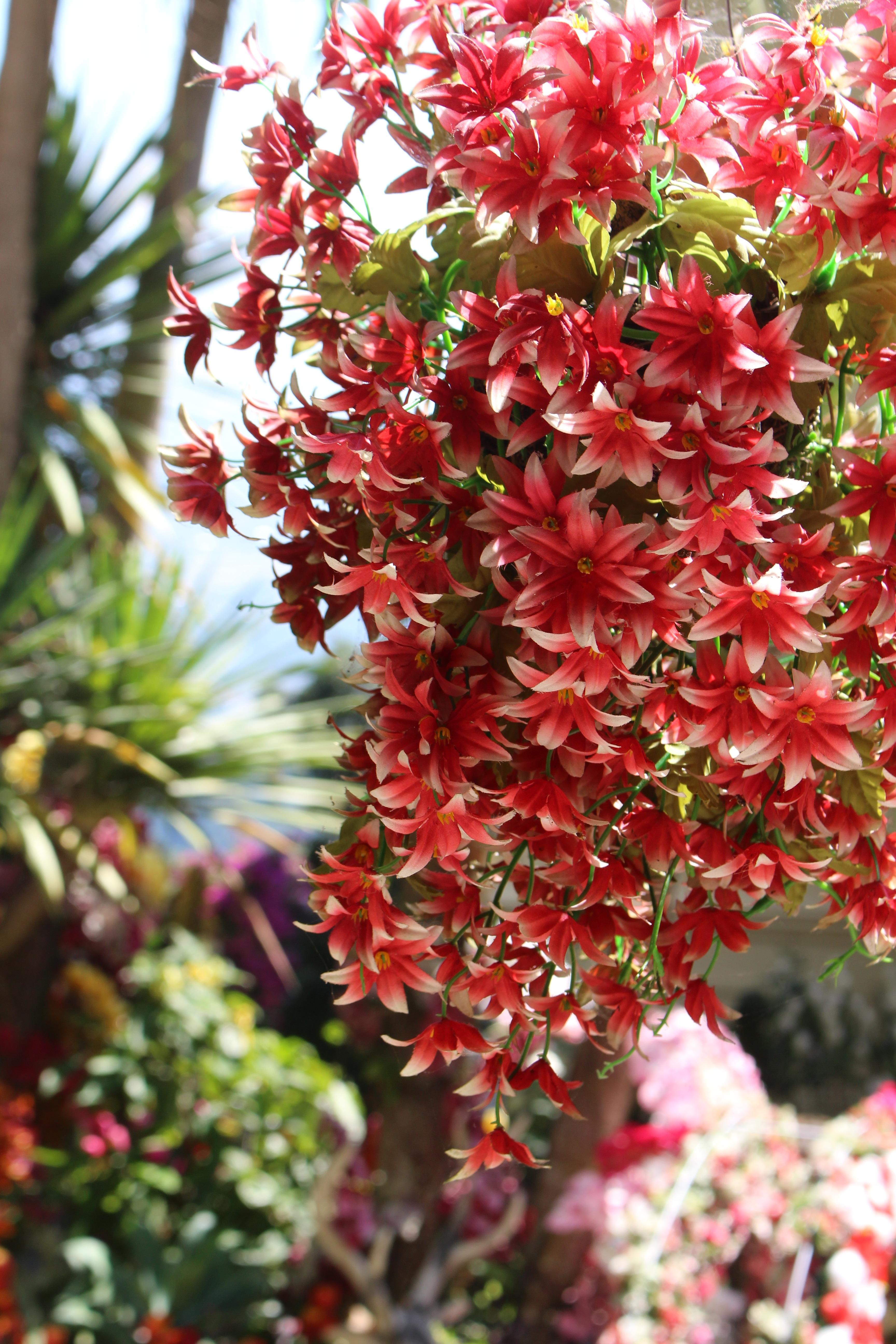 Fotos gratis naturaleza flor verde rojo tropical for Arbol rojo jardin