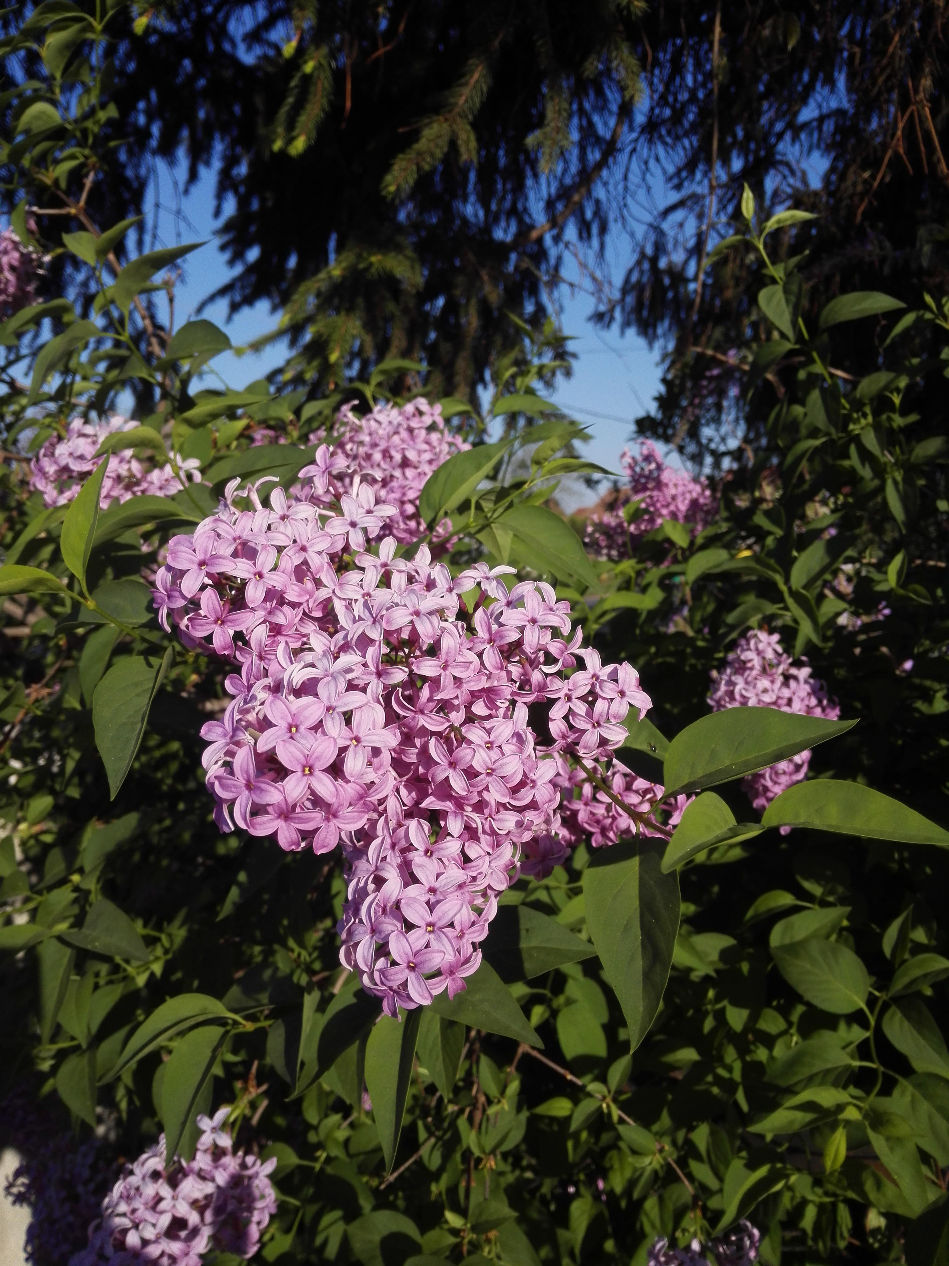 Images Gratuites La Nature Lac Botanique Jardin Flore Fleur