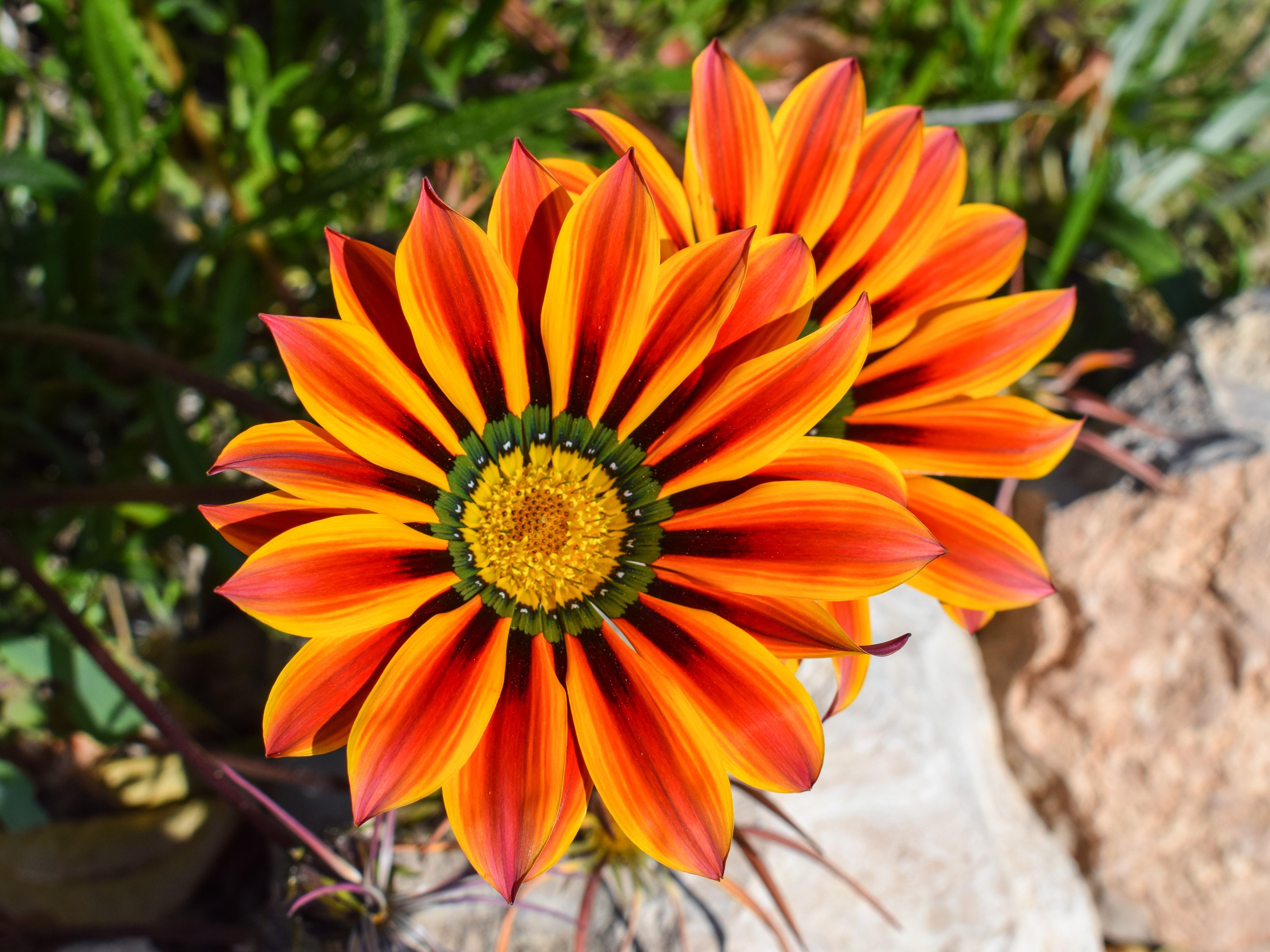 Free nature blossom flower petal bloom floral spring